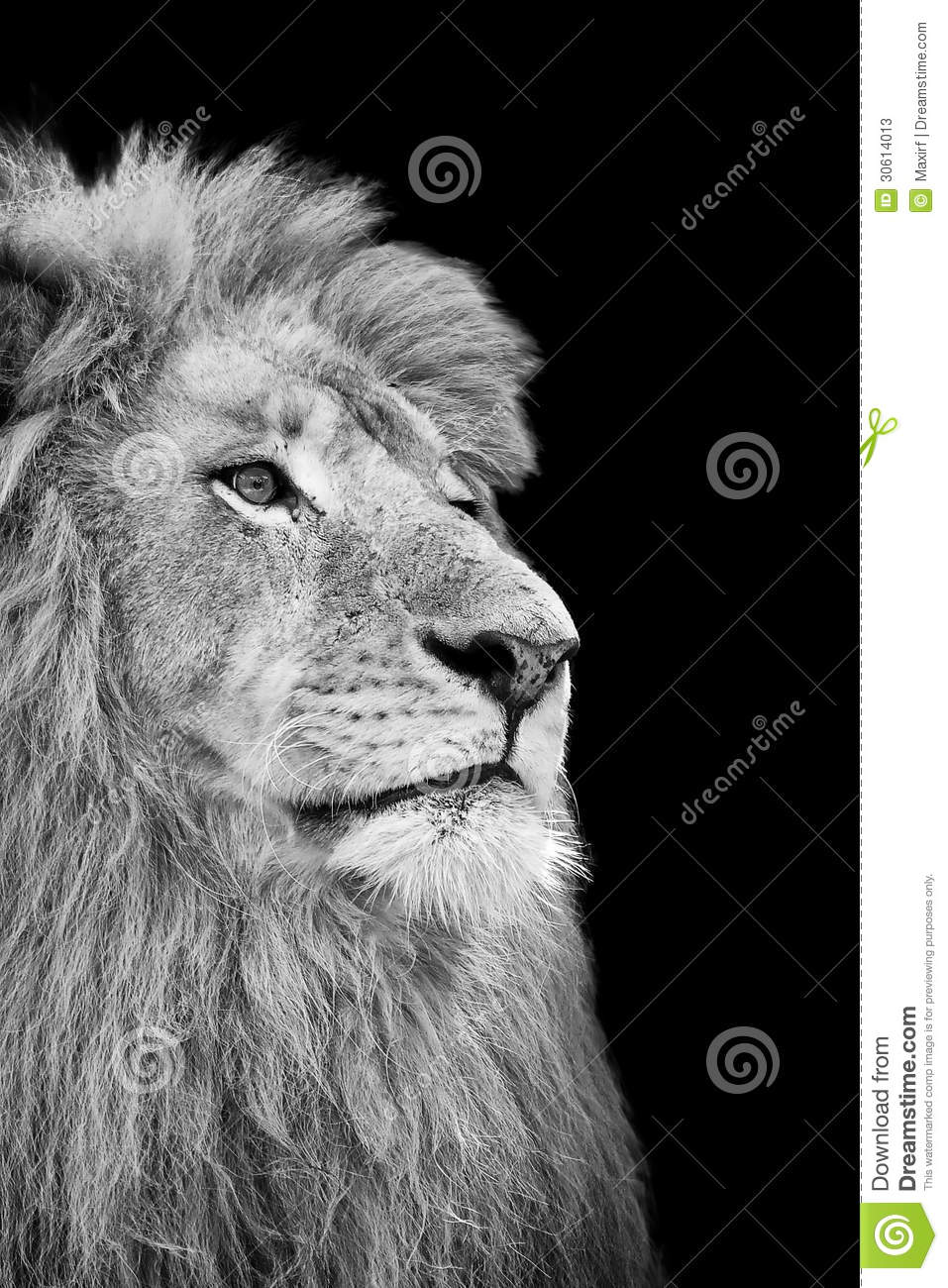 Black And White Isolated Lion Face Stock Photos - Image ...