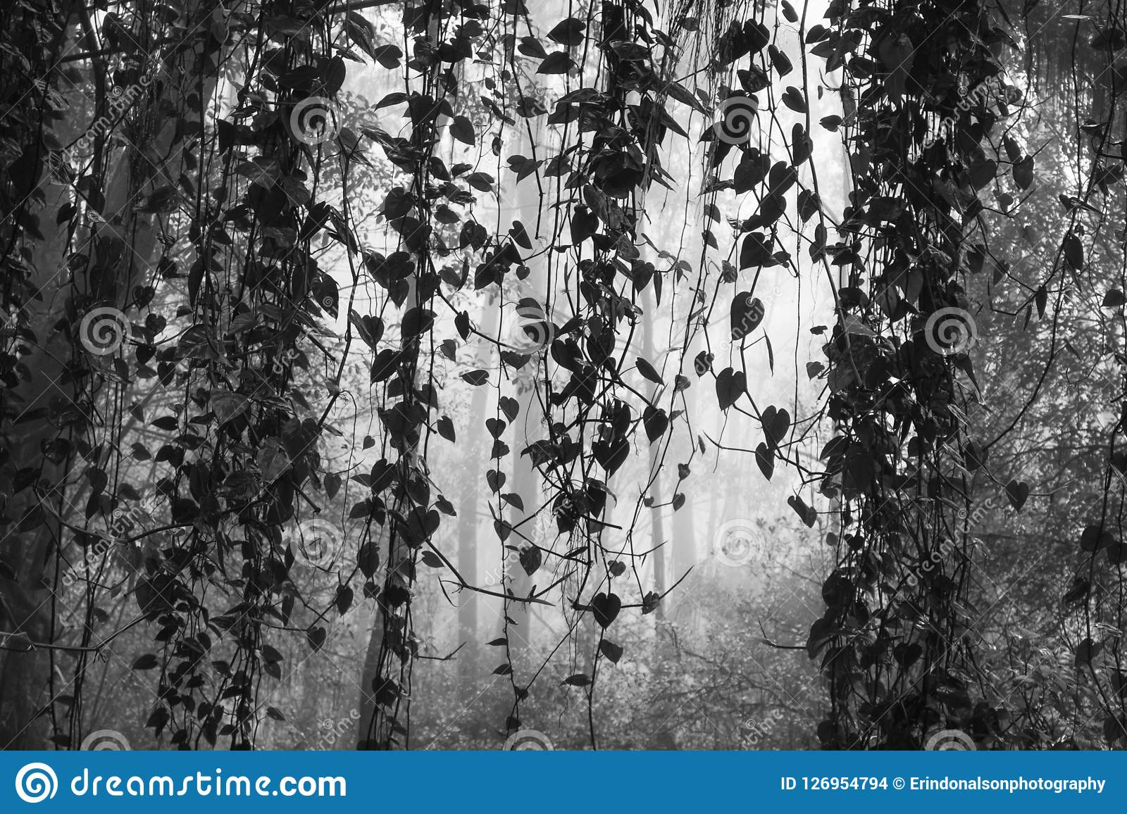 Black and white jungle vines with leaves hanging down against foggy forest background