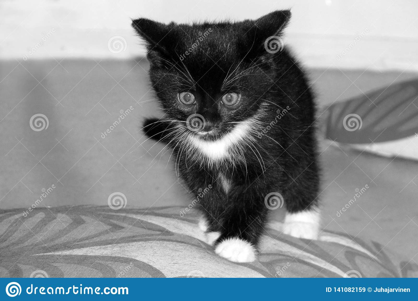 66 643 Black Cute Kitten White Photos Free Royalty Free Stock Photos From Dreamstime