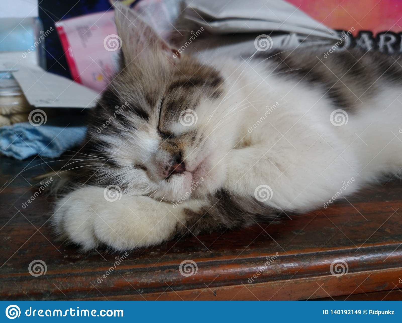 black and white kitten sleeping on the wooden table