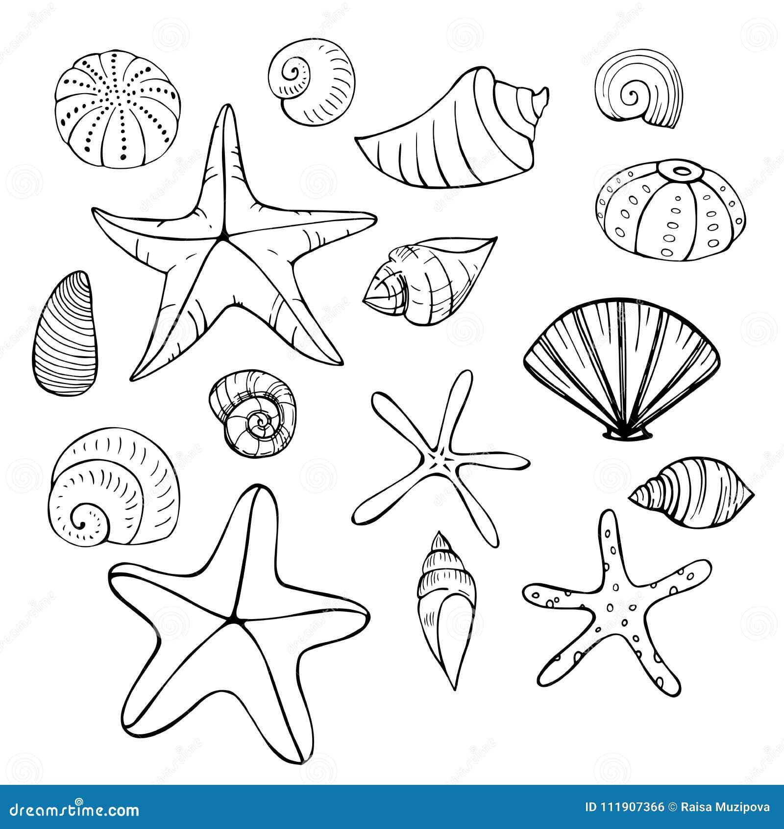 starfish and seashells vector sketch illustration stock vector