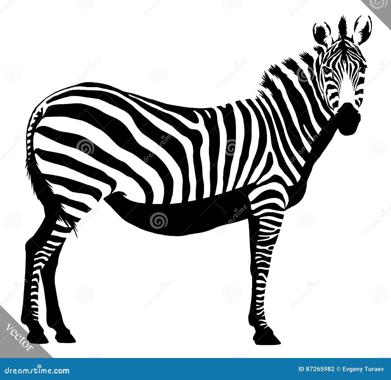Black And White Linear Paint Draw Zebra Vector Illustration Stock