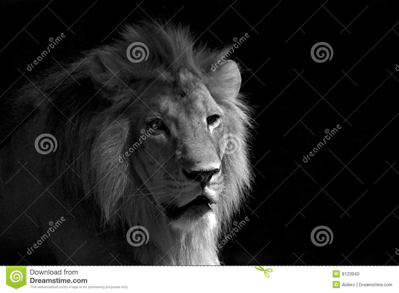 Black And White Lion Relaxing Stock Photo - Image: 8123940