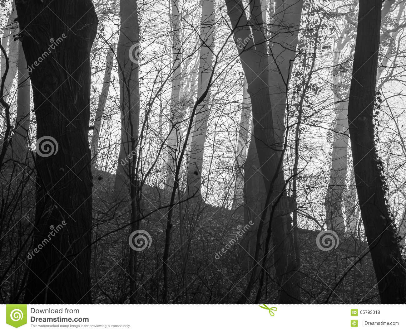 Black And White Misty : Black and white misty spooky forest stock photo image