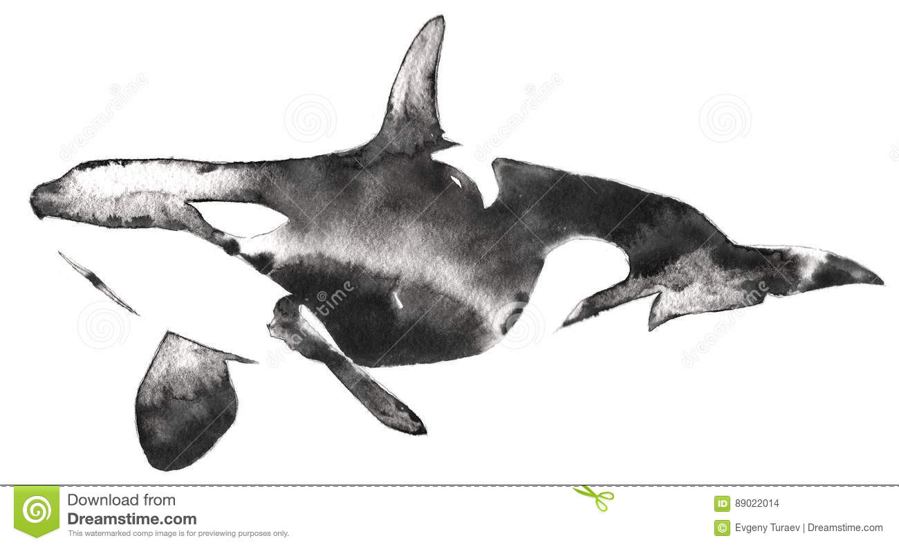 Orca Killer Whale Pod Art Print Illustration |Pod Of Orcas Drawing