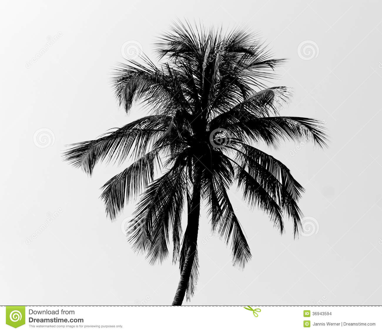 black and white palm tree stock photo image of black 36943594. Black Bedroom Furniture Sets. Home Design Ideas