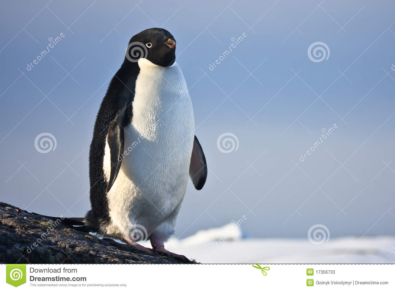 Black White Penguin Vector