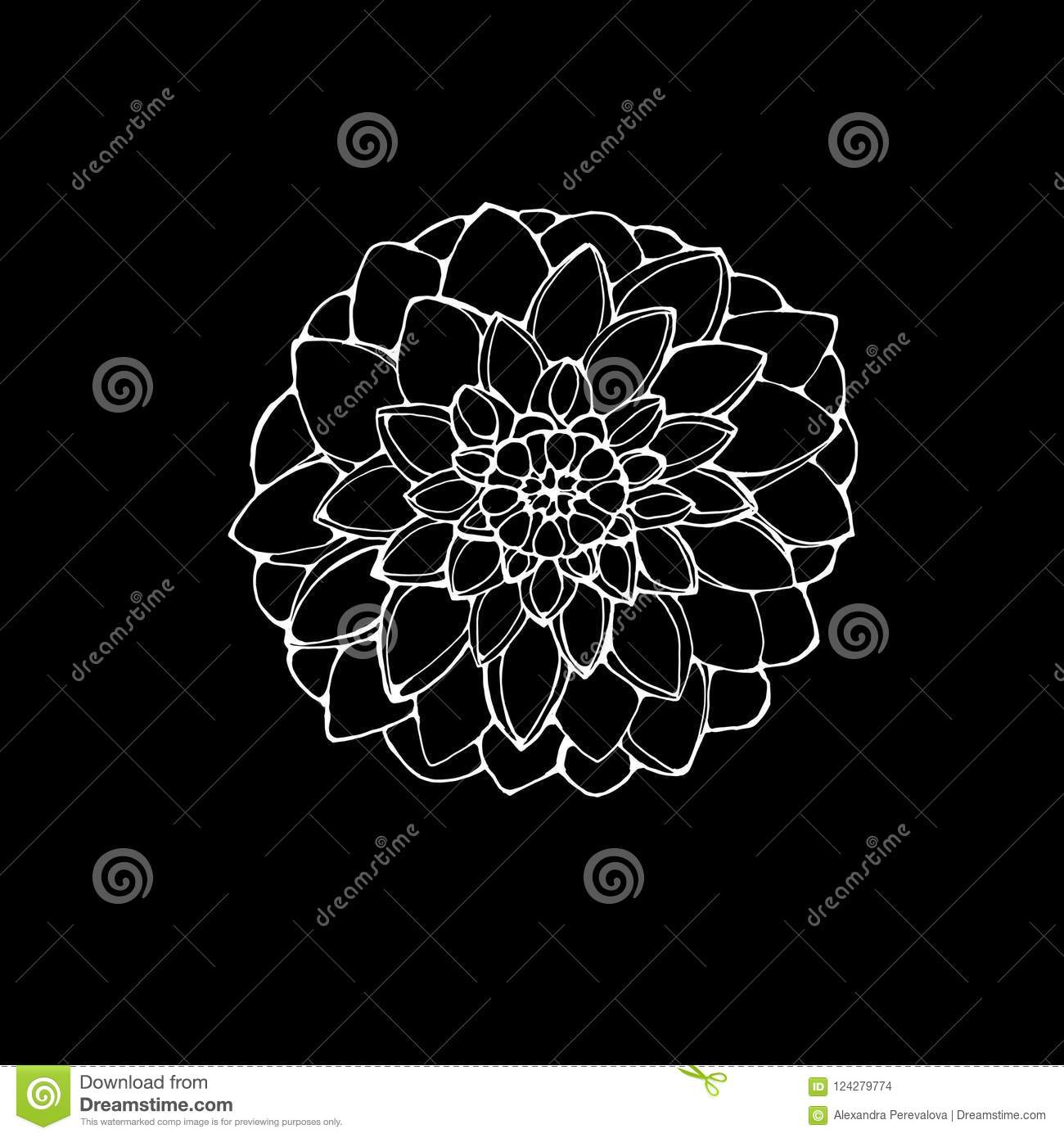 Black And White Picture Of A Dahlia Flower The Idea For A Tattoo