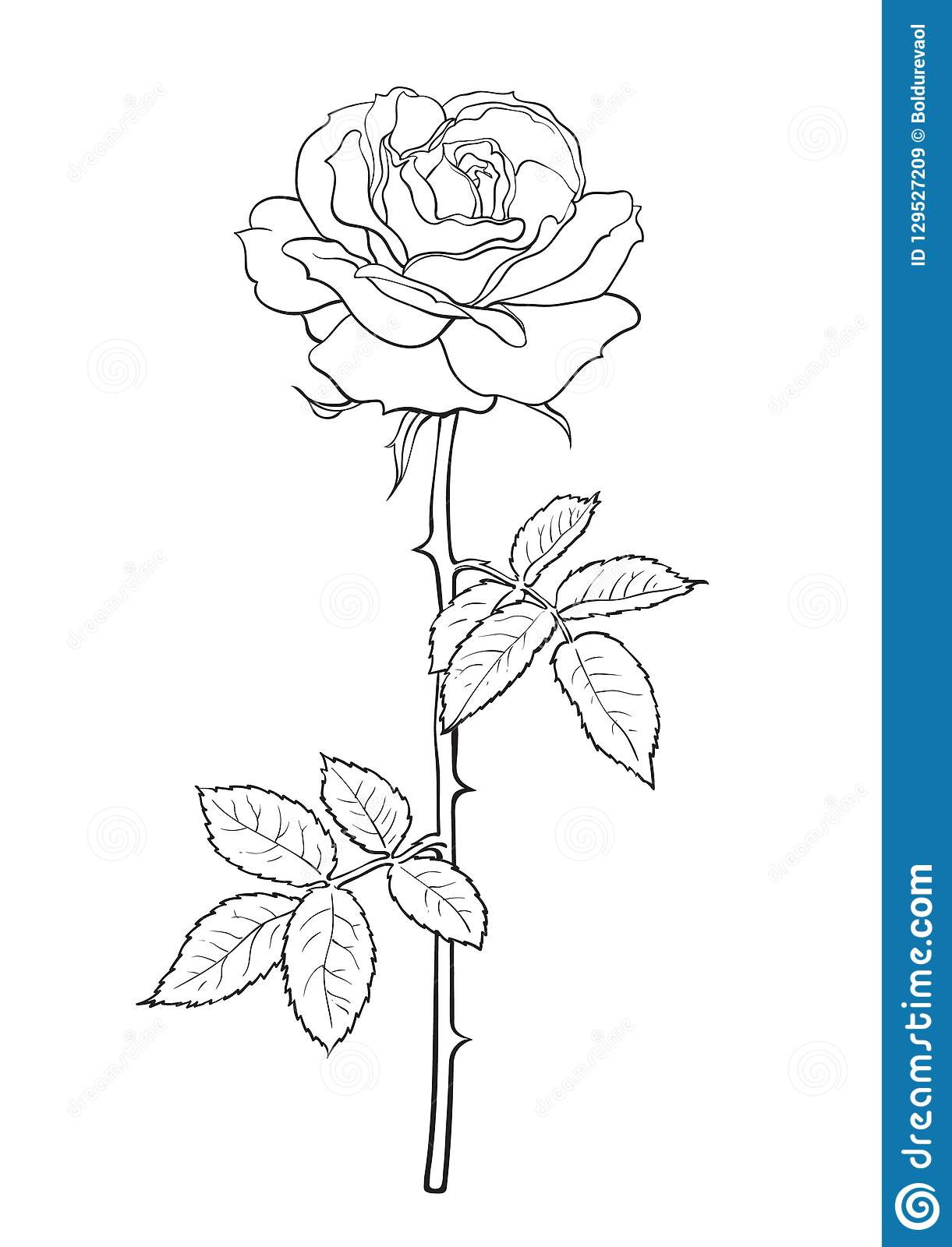 Black And White Rose Flower With Leaves And Stem Decorative Element