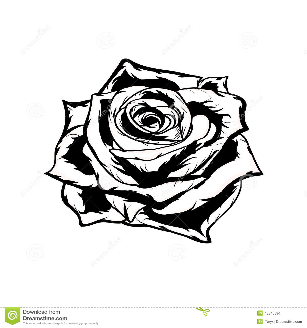 Black And White Rose Hand Drawn Stock Vector Image