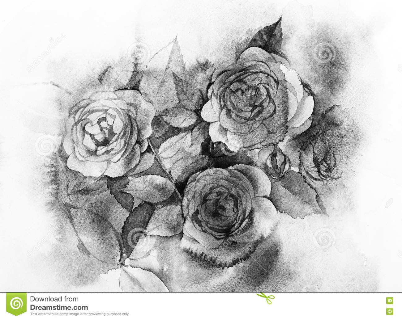 Black and white roses watercolor painting stock illustration download black and white roses watercolor painting stock illustration illustration of spring vintage mightylinksfo