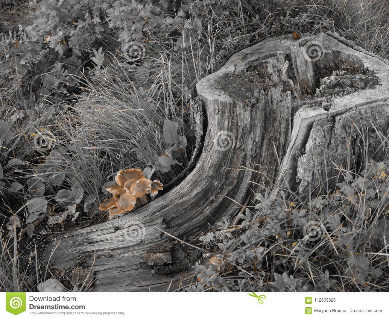 Black and white rotted log with pop of color