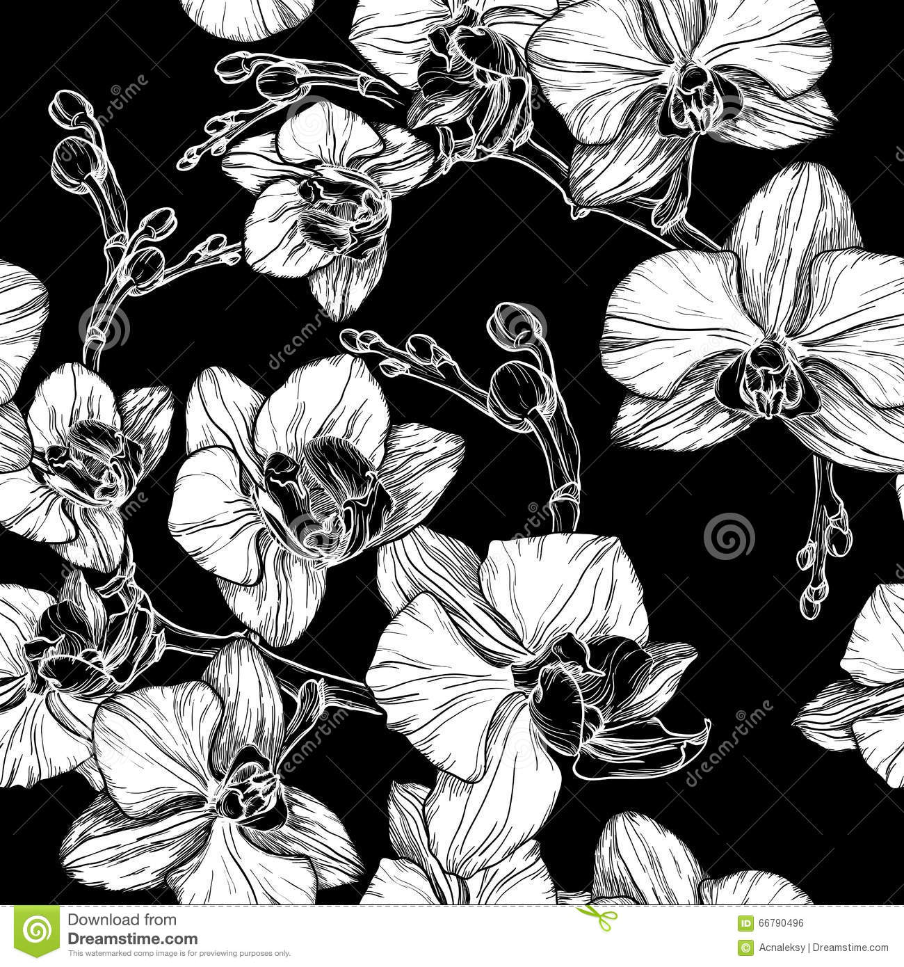black and white seamless pattern with hand drawing orchid flower stock vector image 66790496. Black Bedroom Furniture Sets. Home Design Ideas