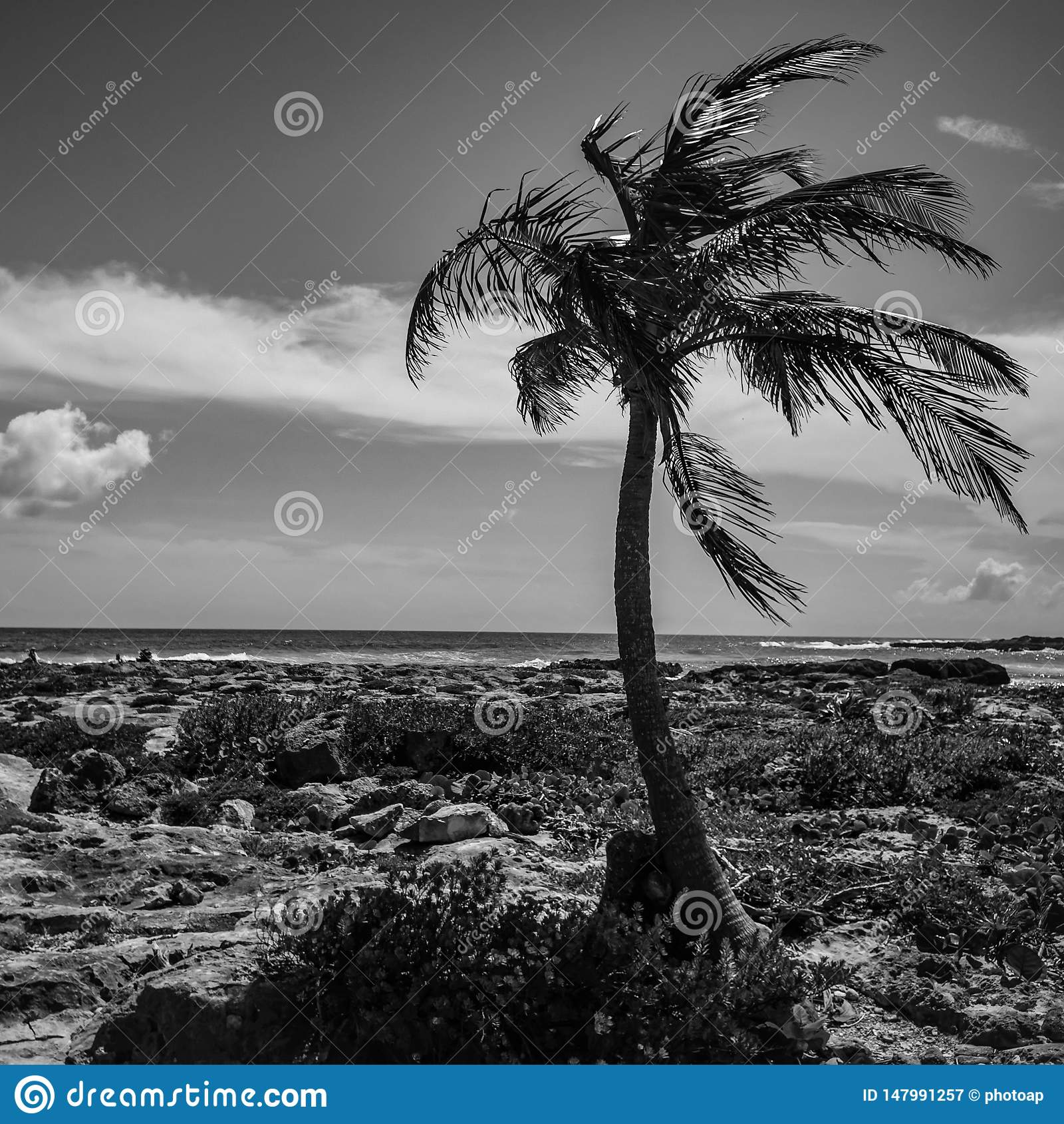Monochrome Palm in paradise