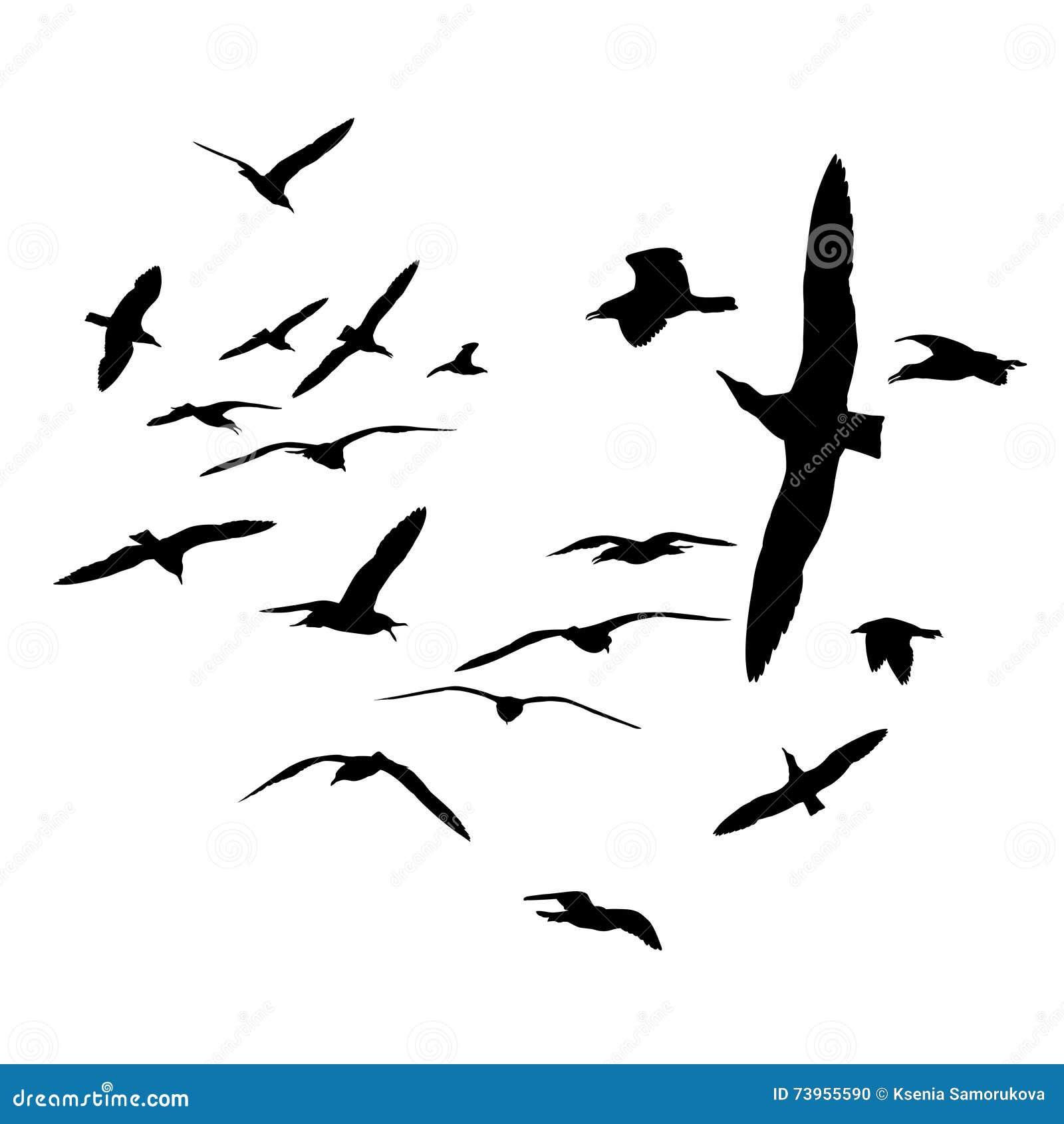 black on white silhouettes  flock of sea gull birds  stock
