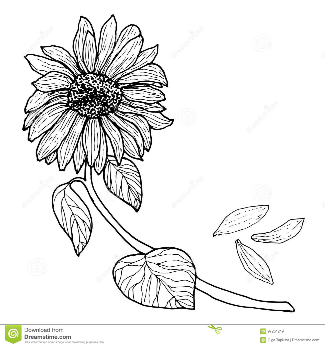 Download Black White Sunflower On A Branch With Leaves Stock Vector