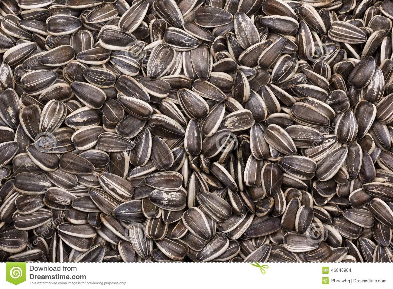 Download Black And White Sunflower Seeds As Background Stock Photo