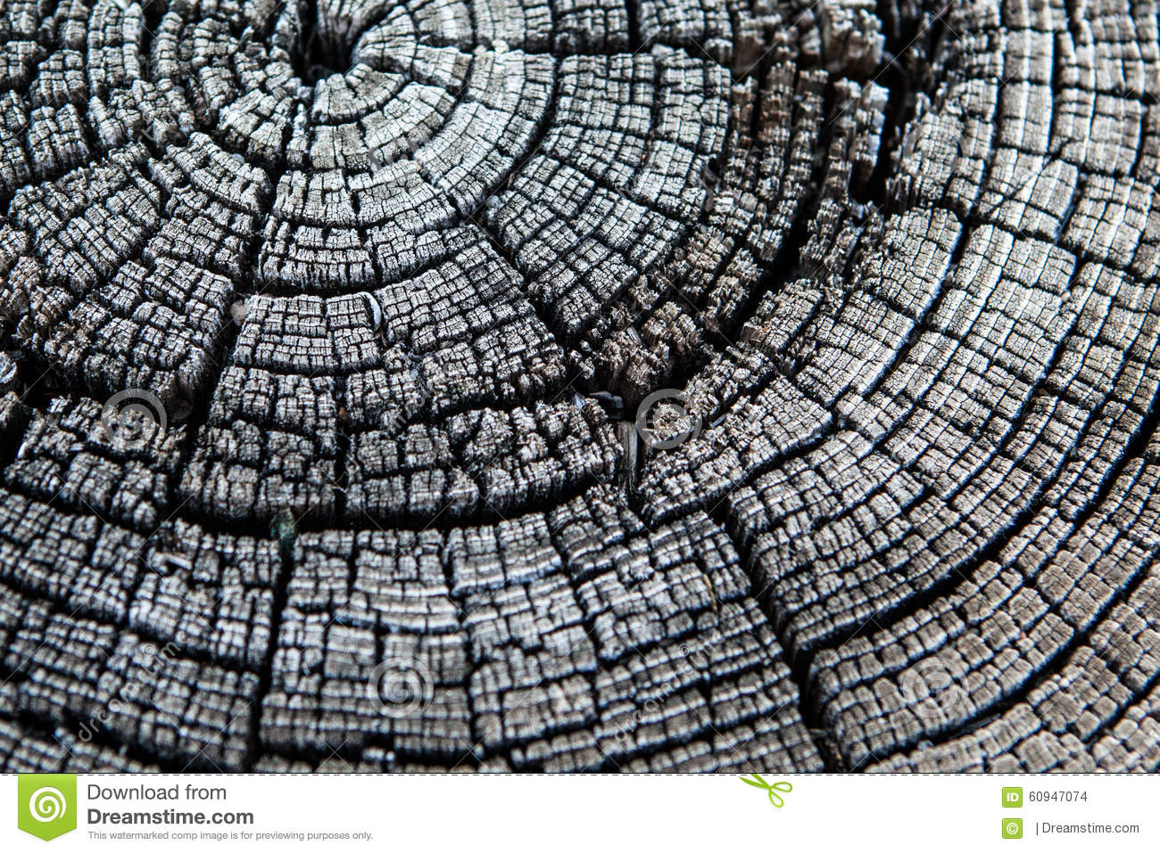Black And White Tree Stump Rings Stock Photo Image Of