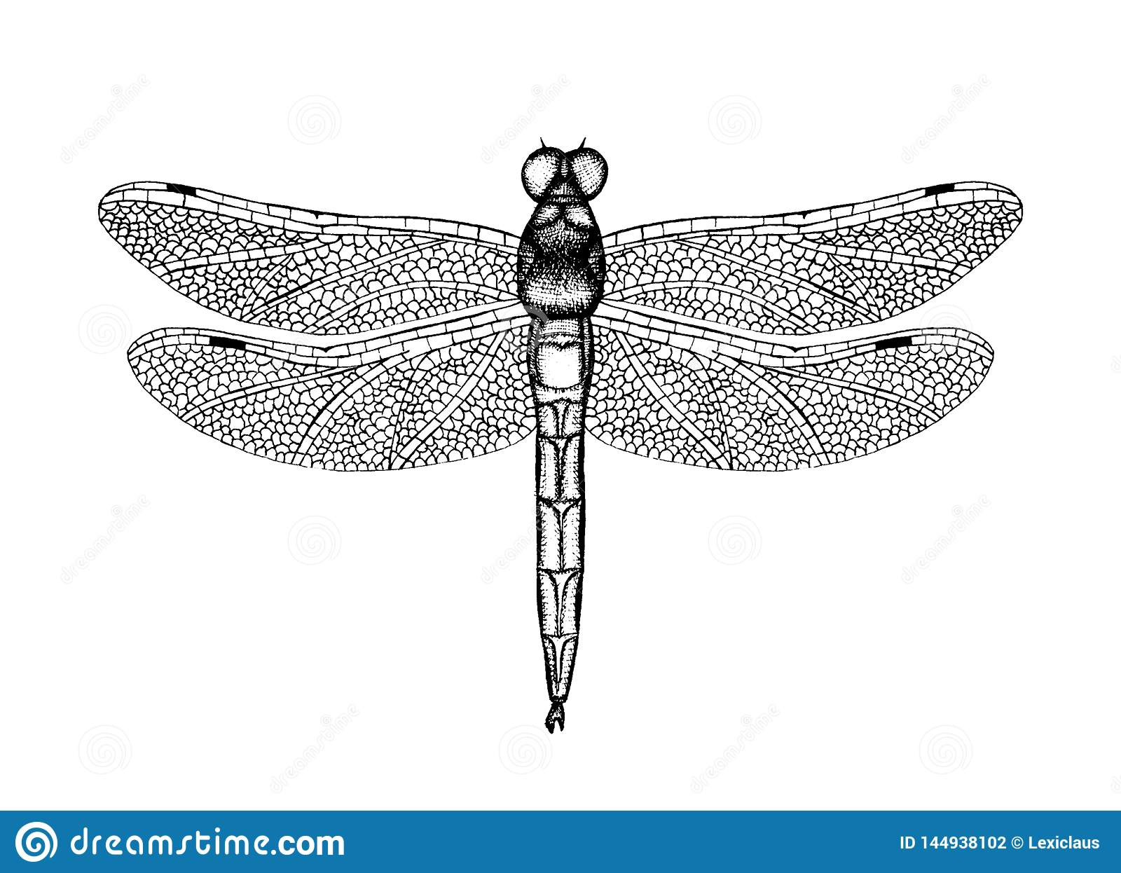 Black and white vector illustration of a dragonfly