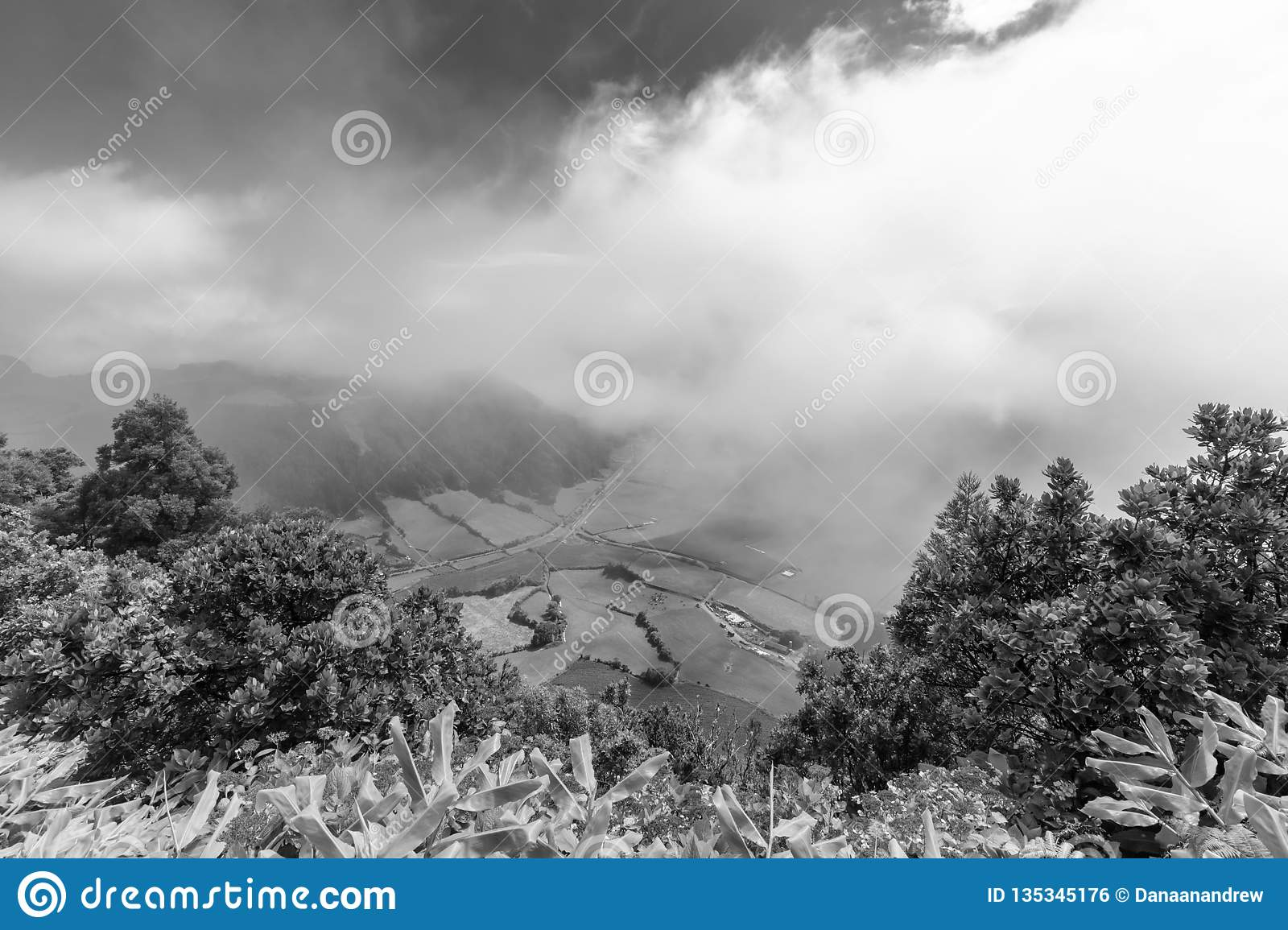 Black and White Azores Pastures