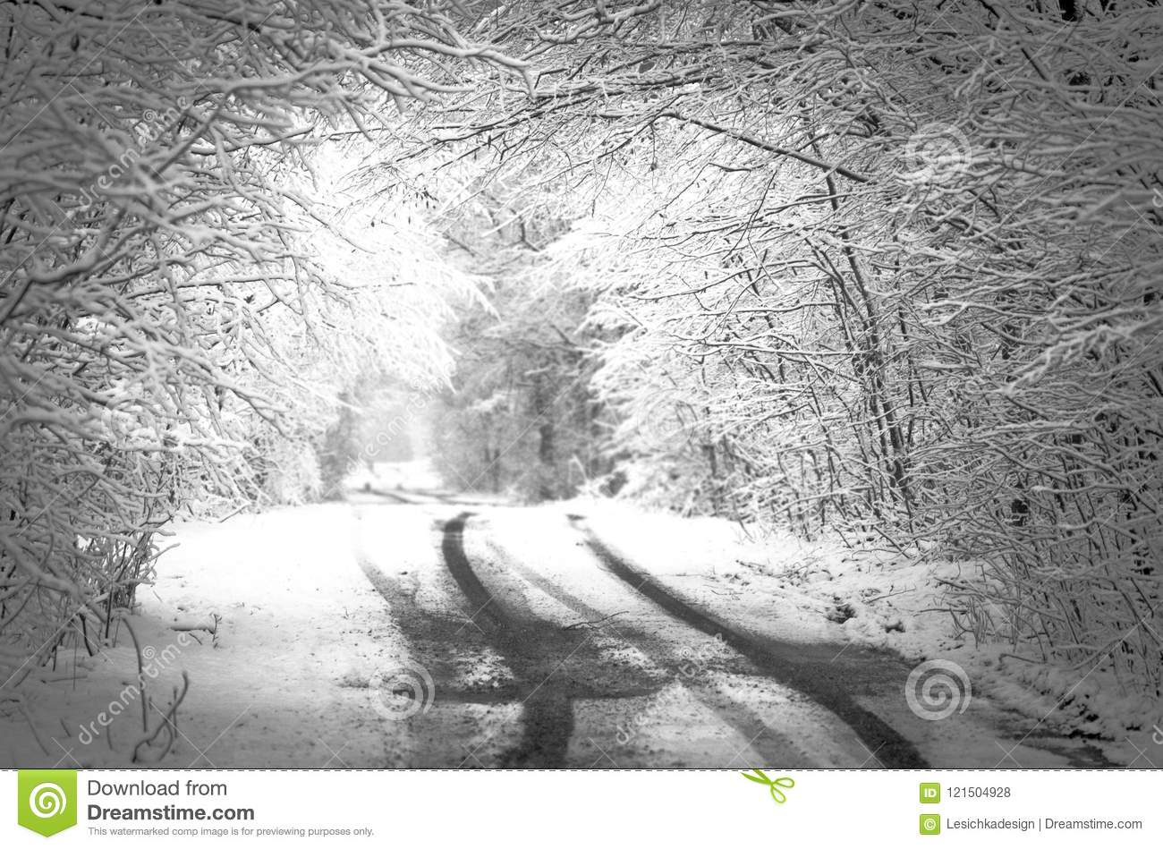 Winter snow forest black and white photo space for text stock