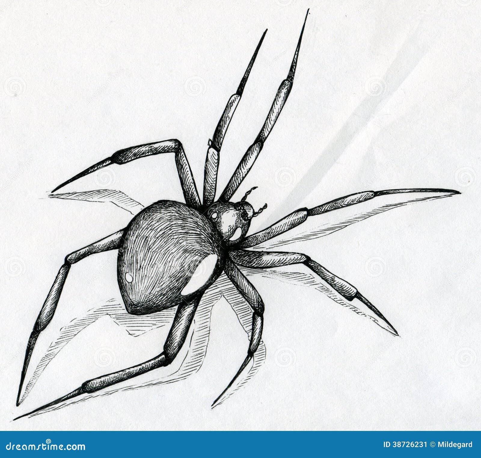 Black Widow Spider Drawing Stock Illustration Illustration
