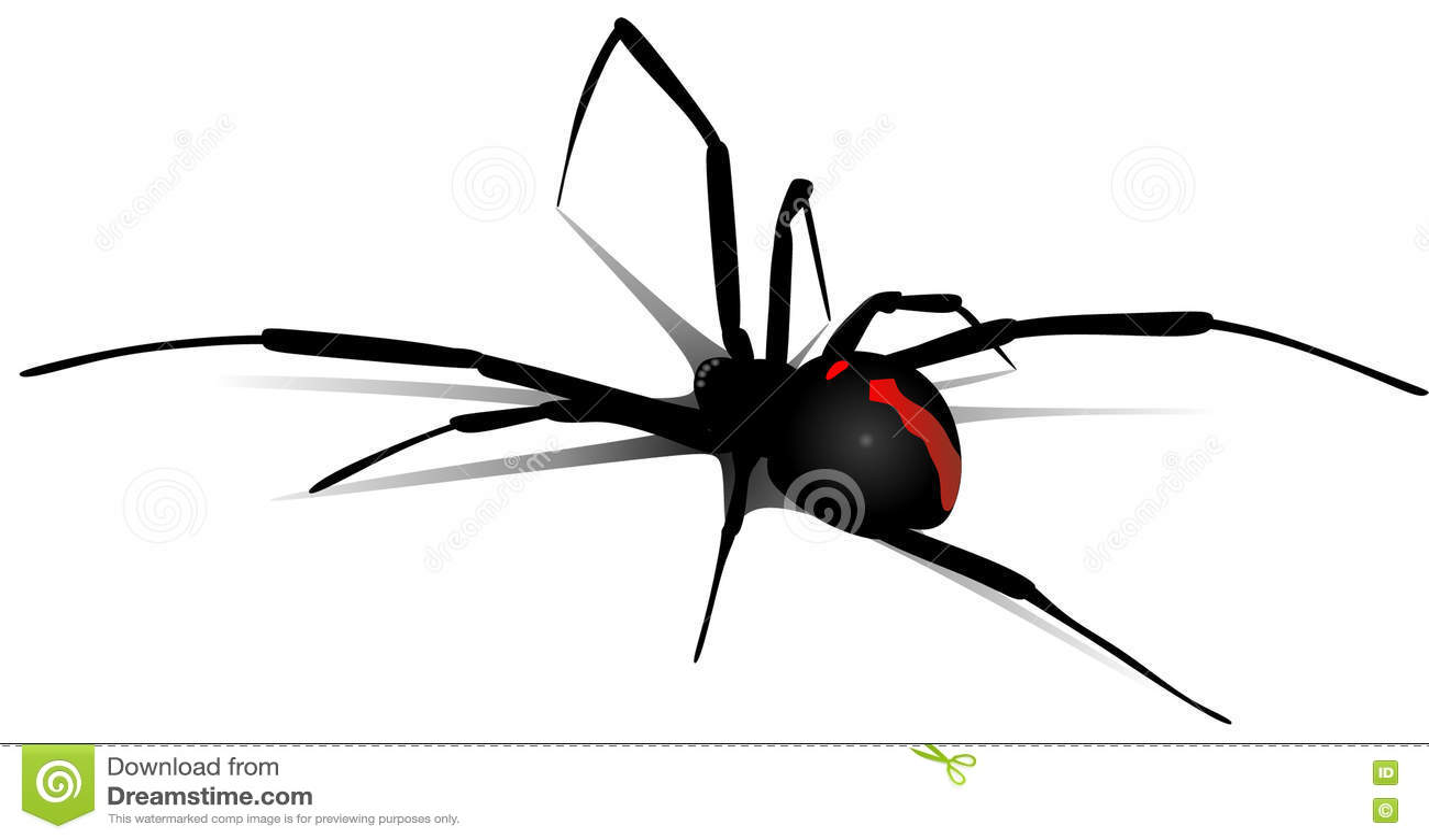 Black Widow Stock Vector Illustration Of Dangerous Gray