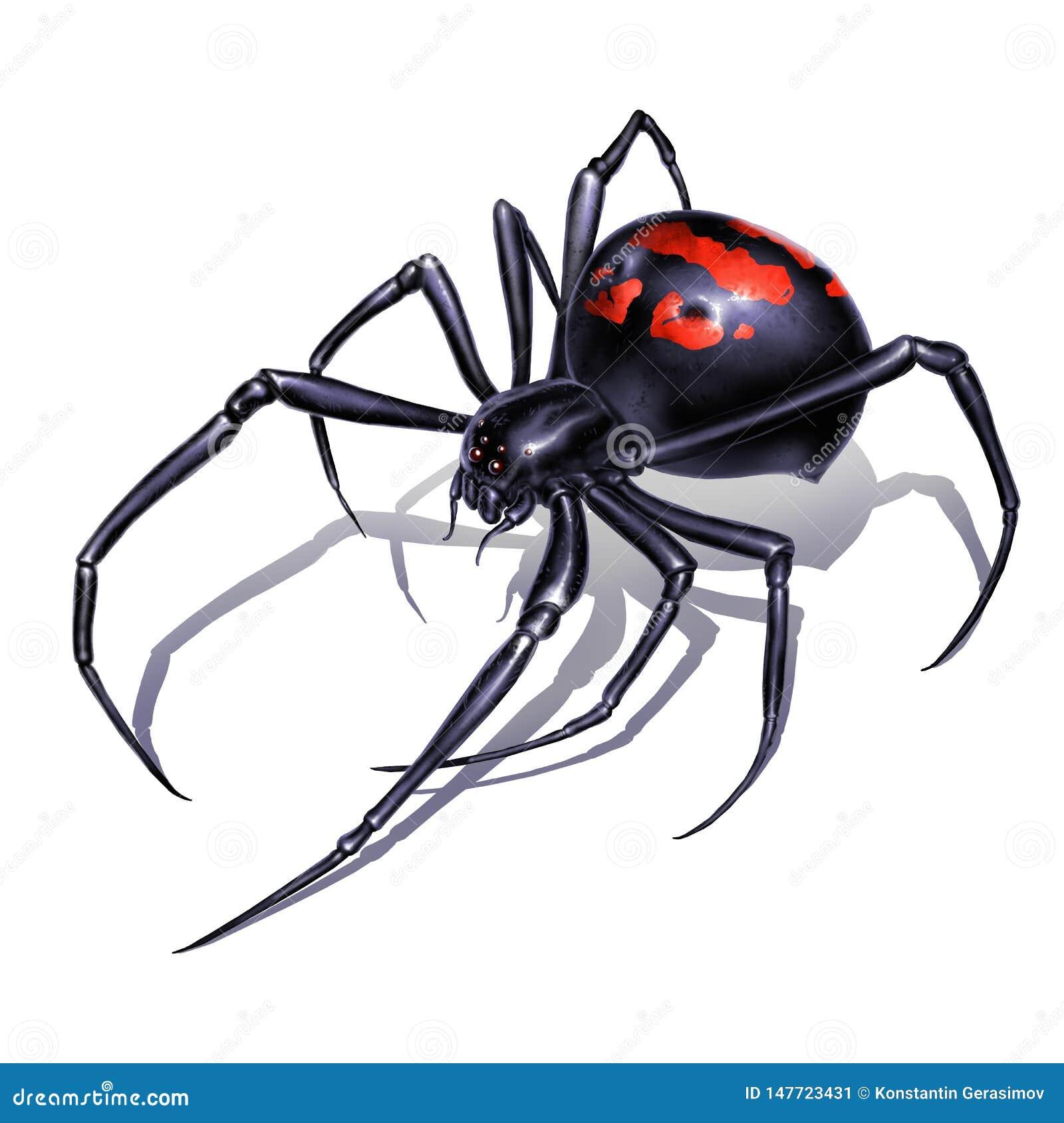 Black Widow Spider On White Background Realistic