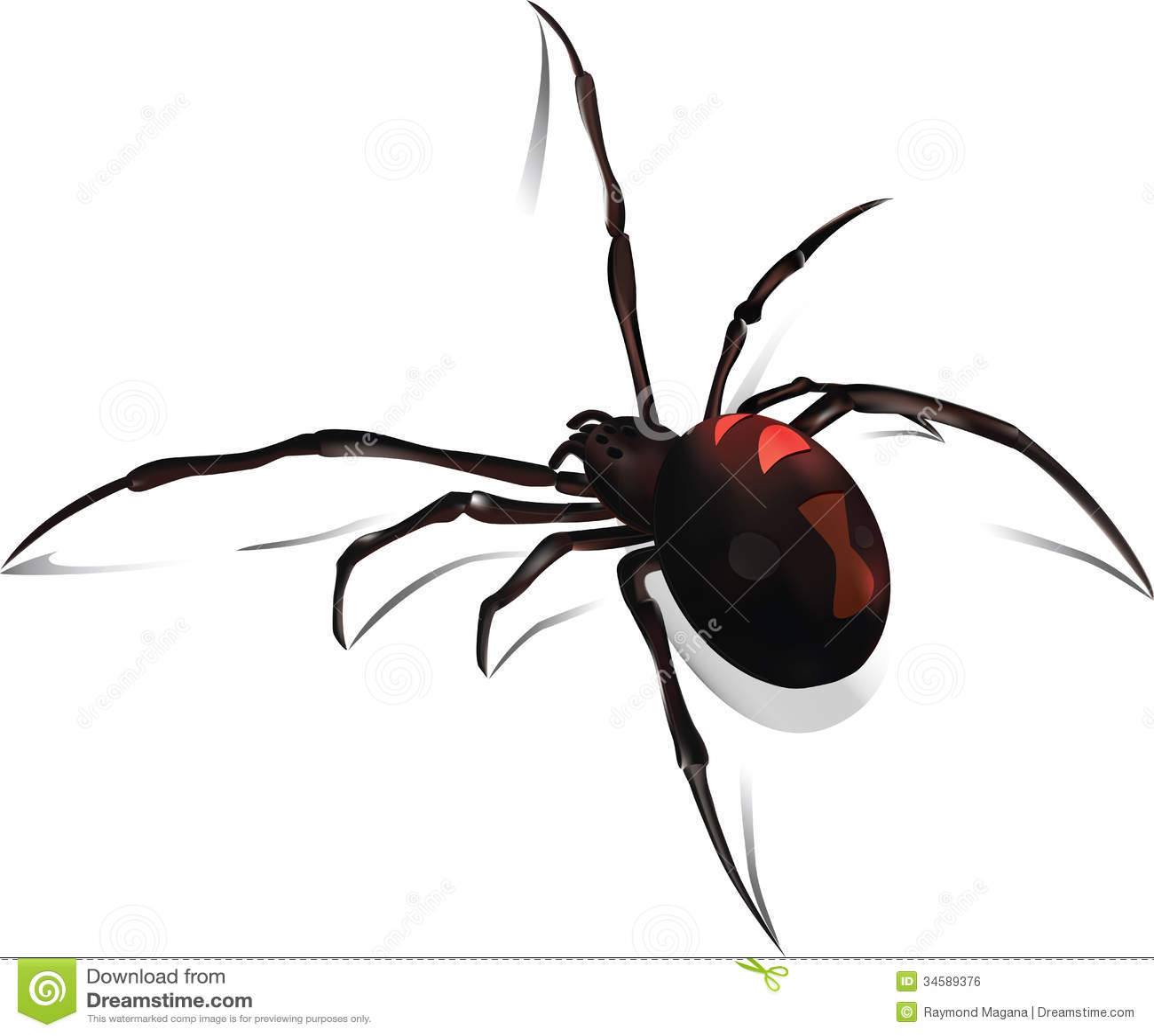 Black Widow Vector Royalty Free Stock Image - Image: 34589376