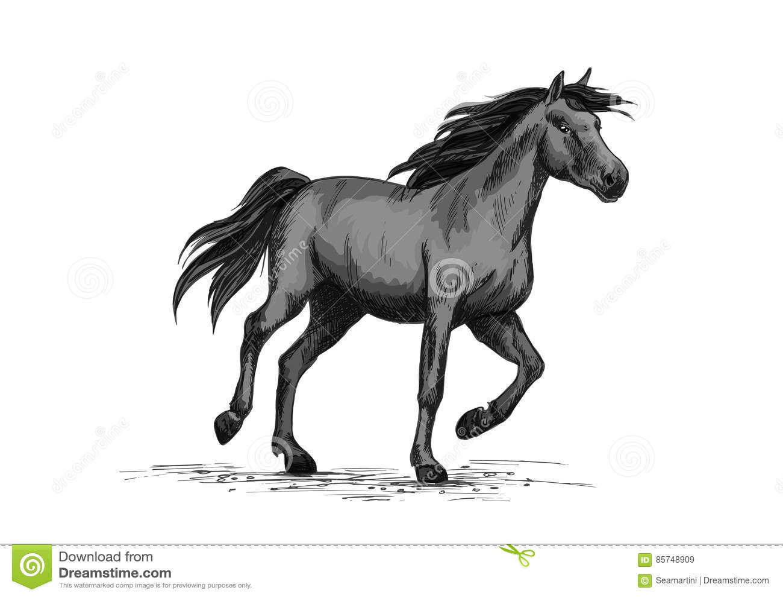 Black Wild Horse Running On Racing Sport Stock Vector Illustration Of Foal Exhibition 85748909