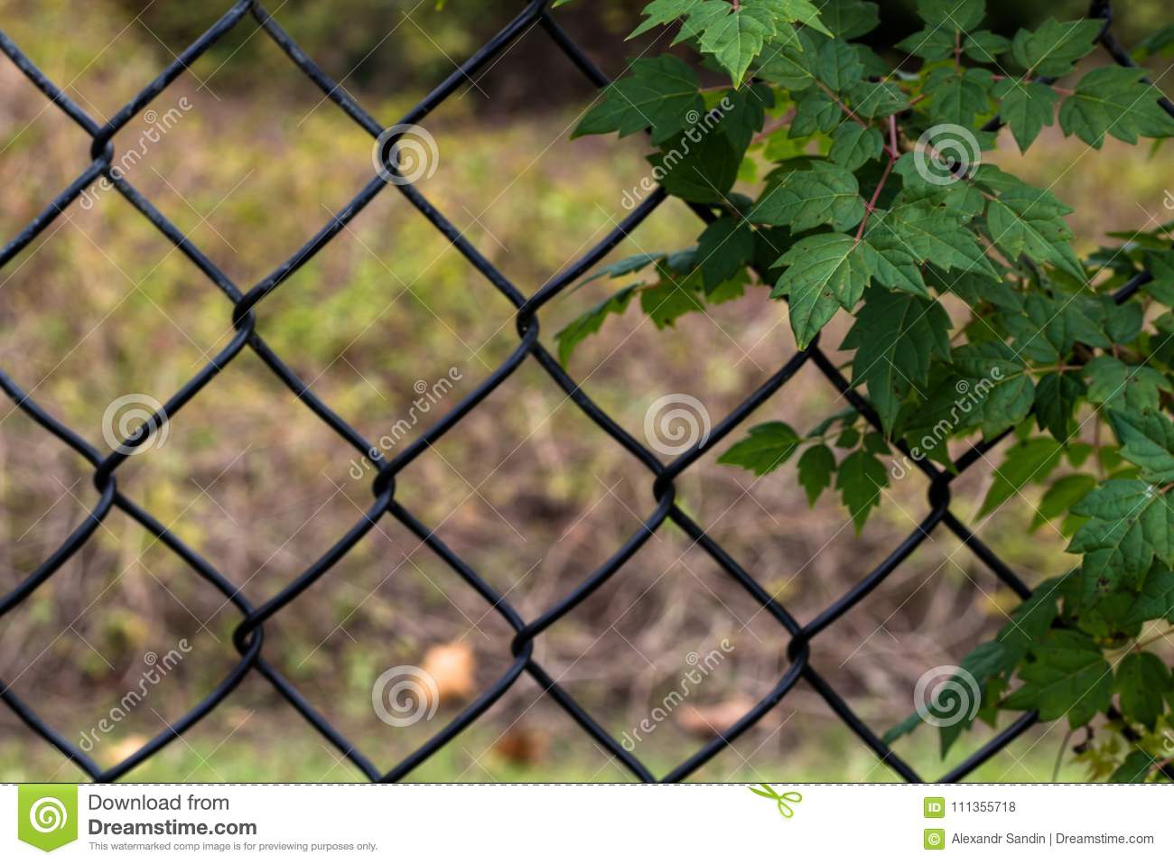 Ivy On Black Wire Mesh Fence Stock Photo - Image of background ...