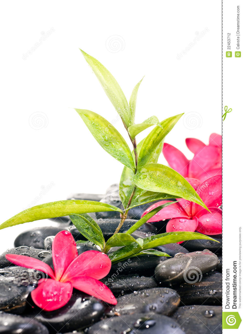 Black Zen Stones With Red Flowers Stock Photography
