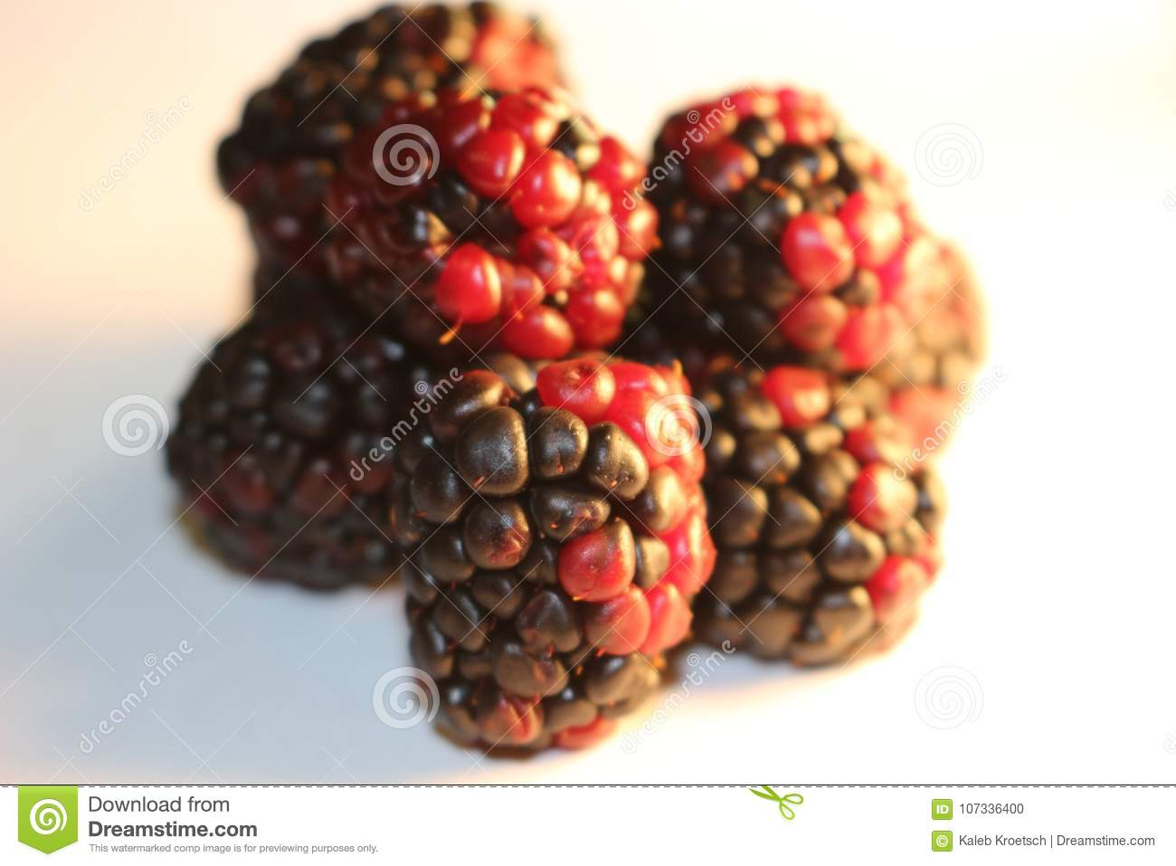 Blackberries isolated that look juicy and ripe. Blackberries are from the Rubus genus in the Rosaceae family
