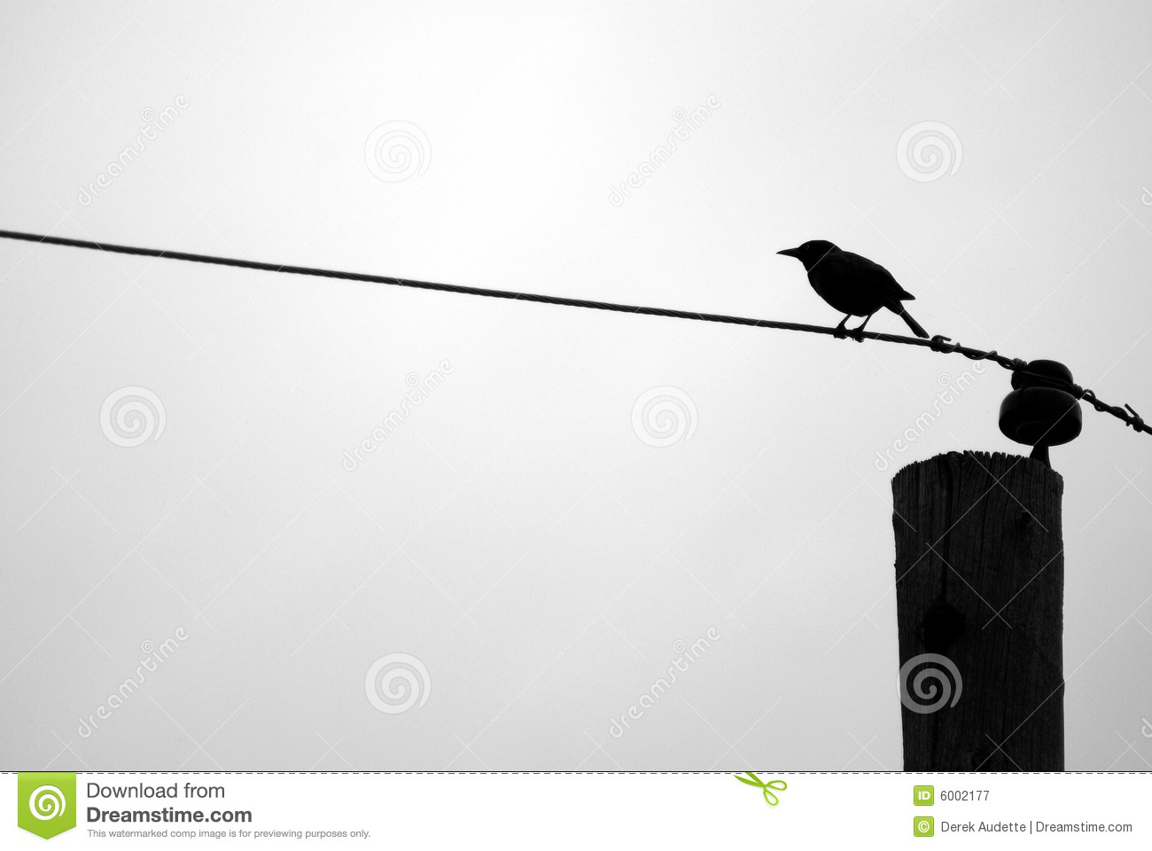 Blackbird Silhouette On Telephone Wire Stock Image - Image of lines ...