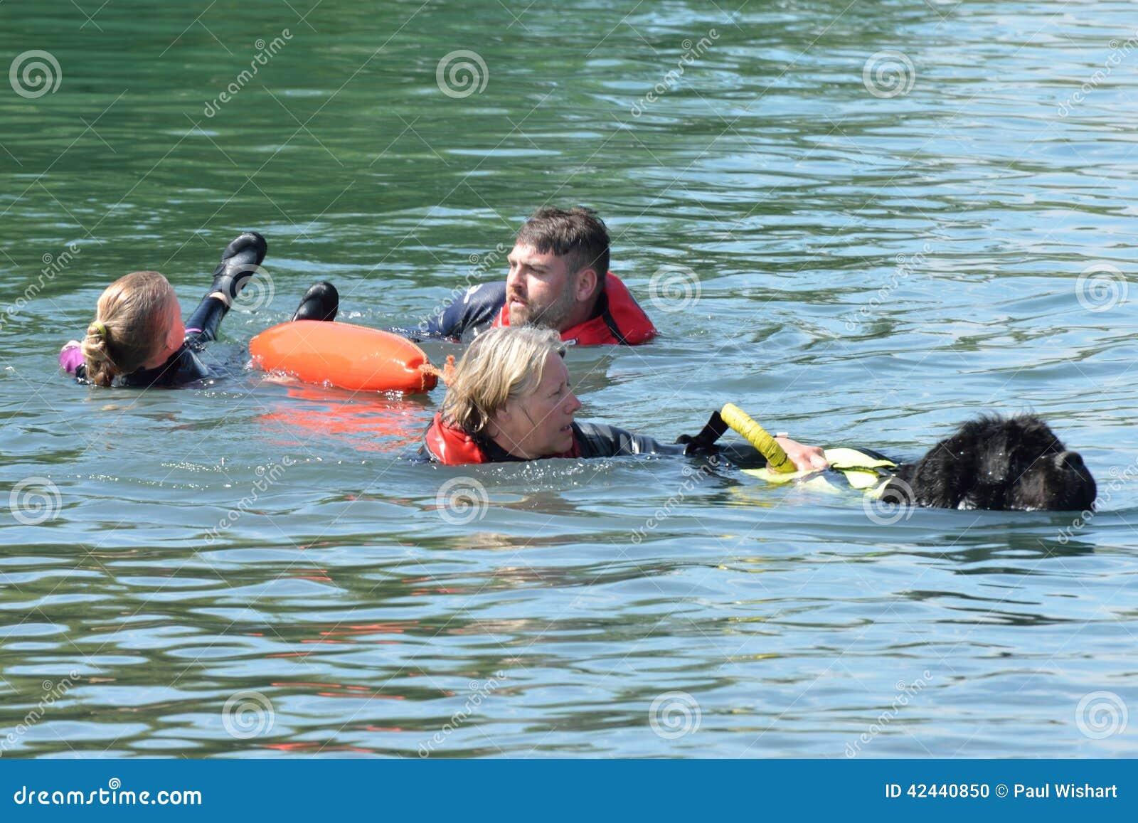 Dog Rescue Essex Uk