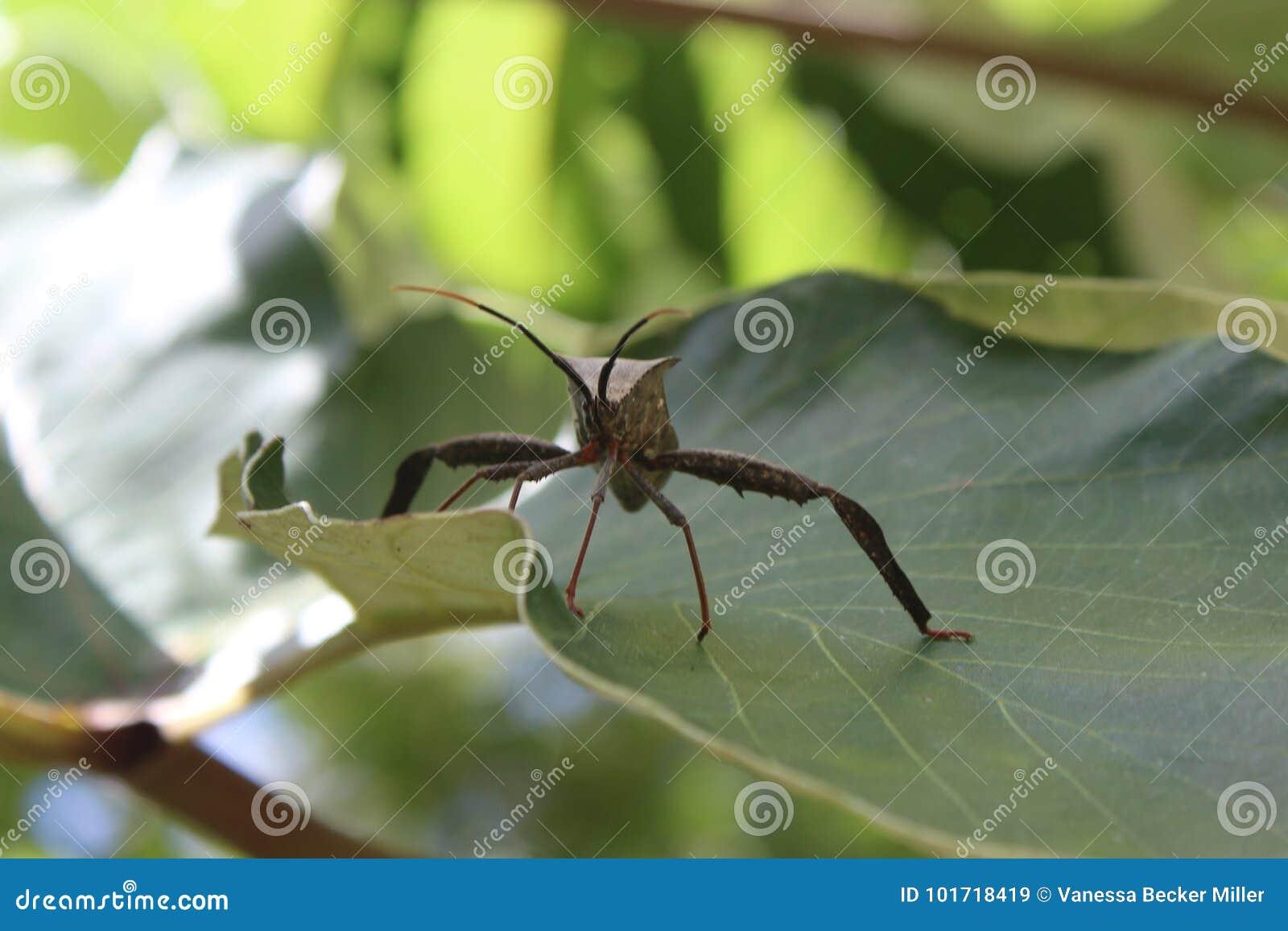 Blad betaald insect op blad
