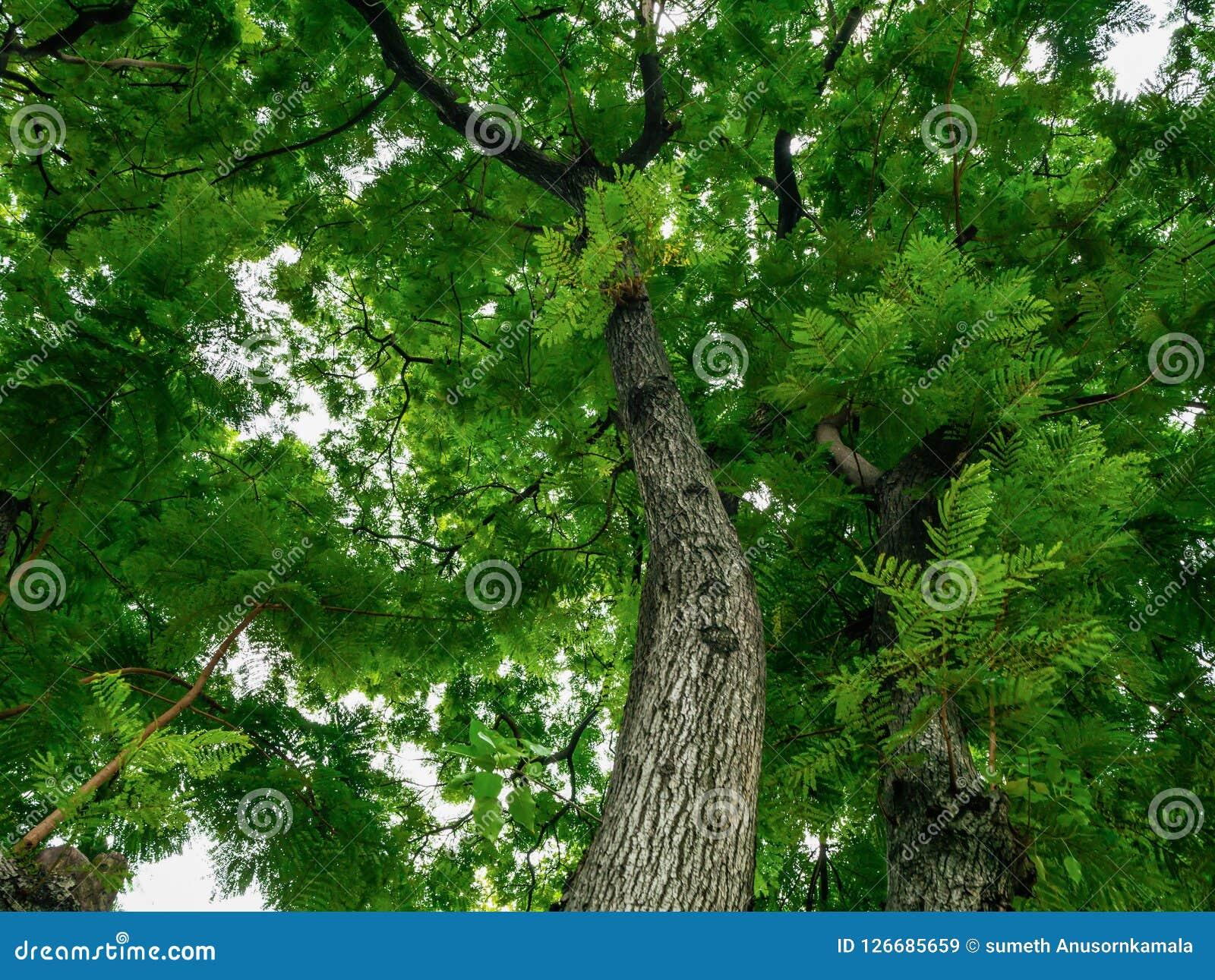 Blad en boom, zonneschijn en Mooie aard