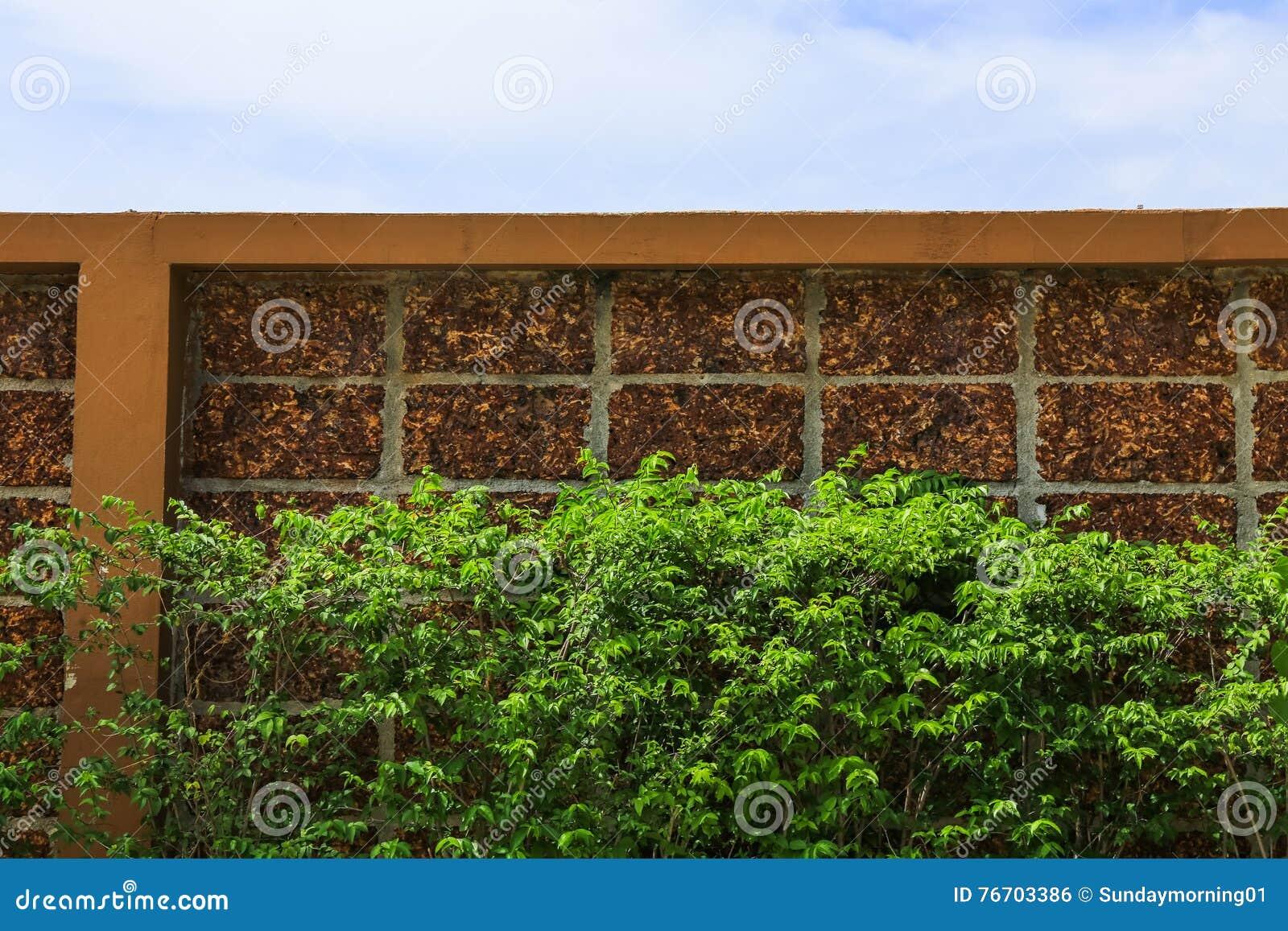 Blad för tegelstenvägg och gräsplanoch blå himmel