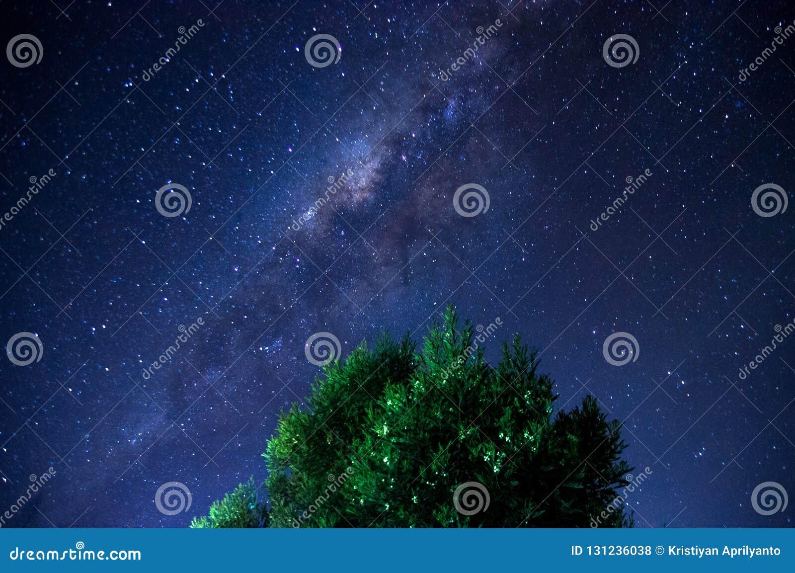 Blad för träd för himmel för blåa stjärnor för mjölkaktig väg