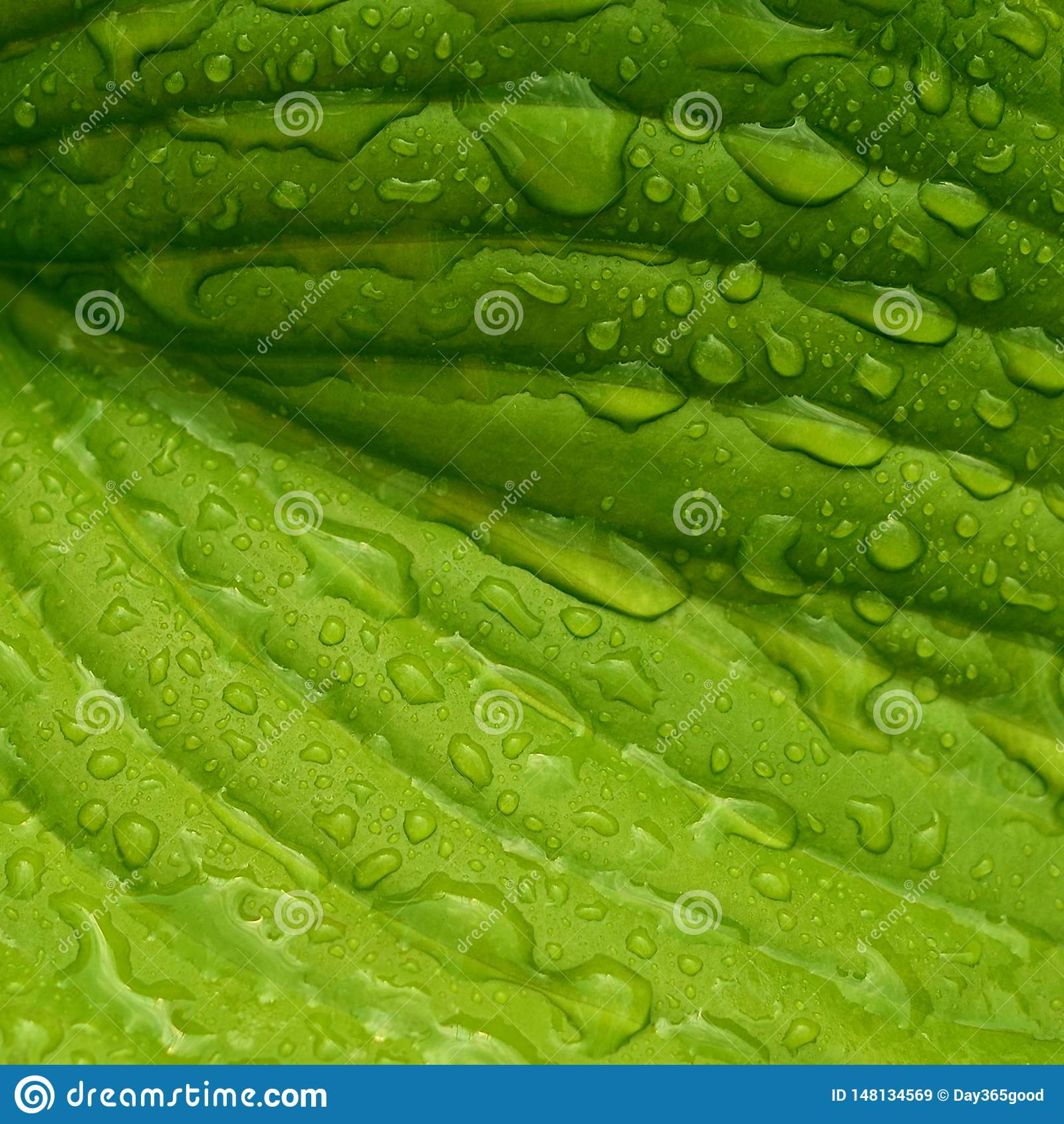 Blad met regendruppels Nat bladclose-up