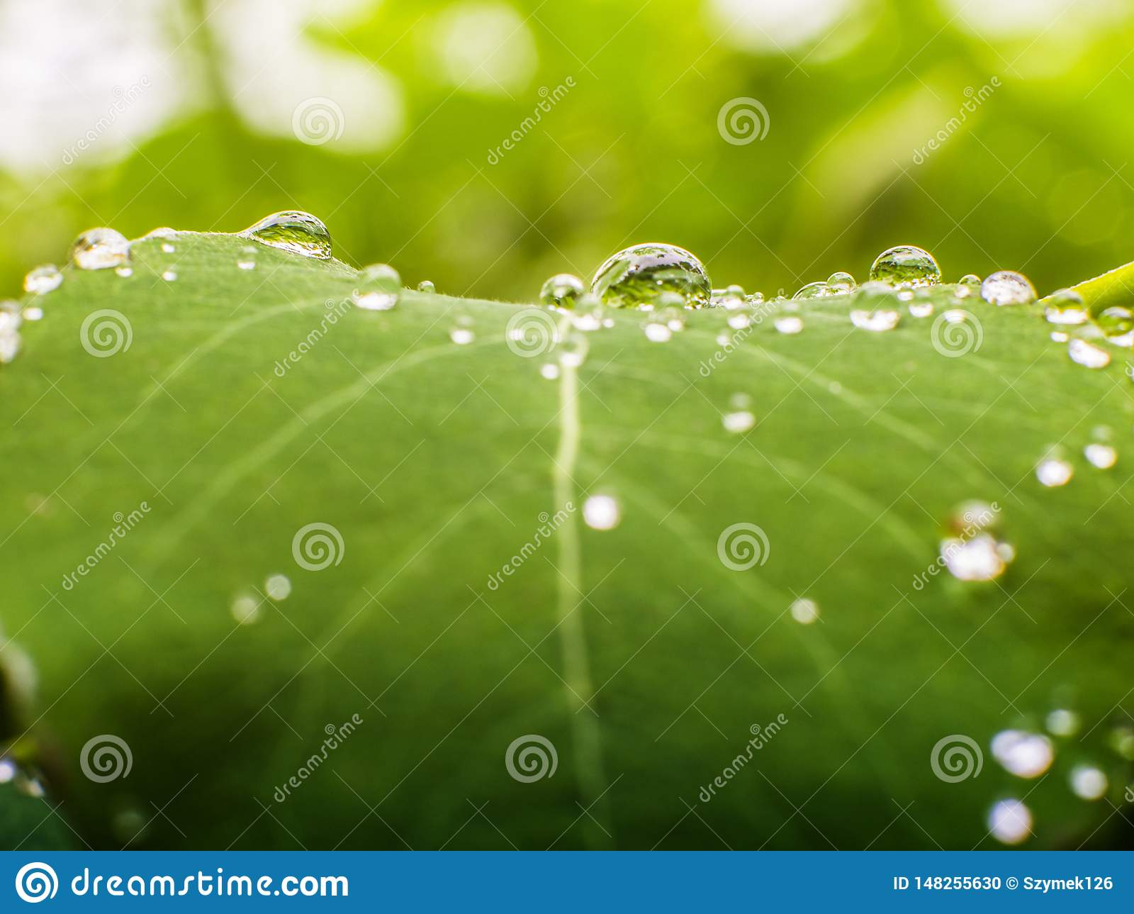 Blad met waterdalingen die wordt gepareld