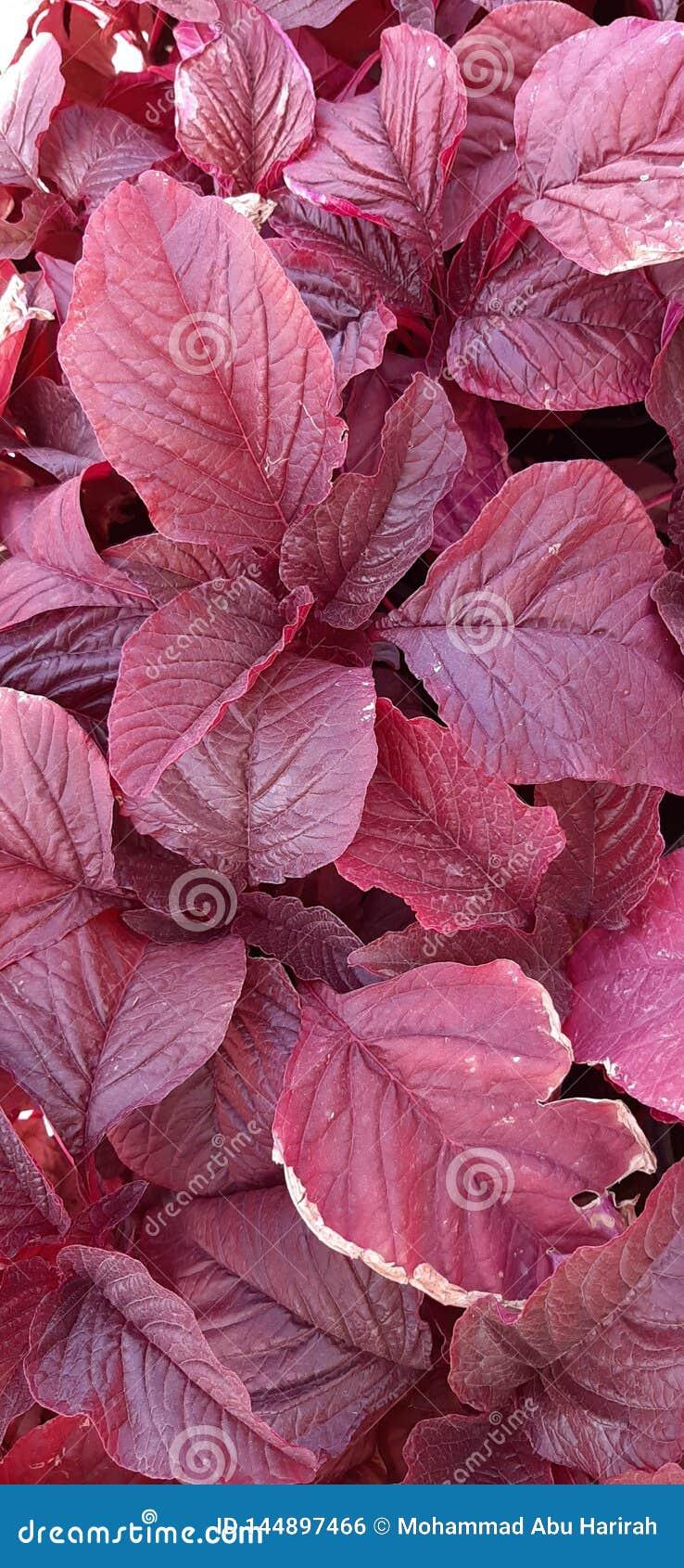 Blad van bloem rode kleur