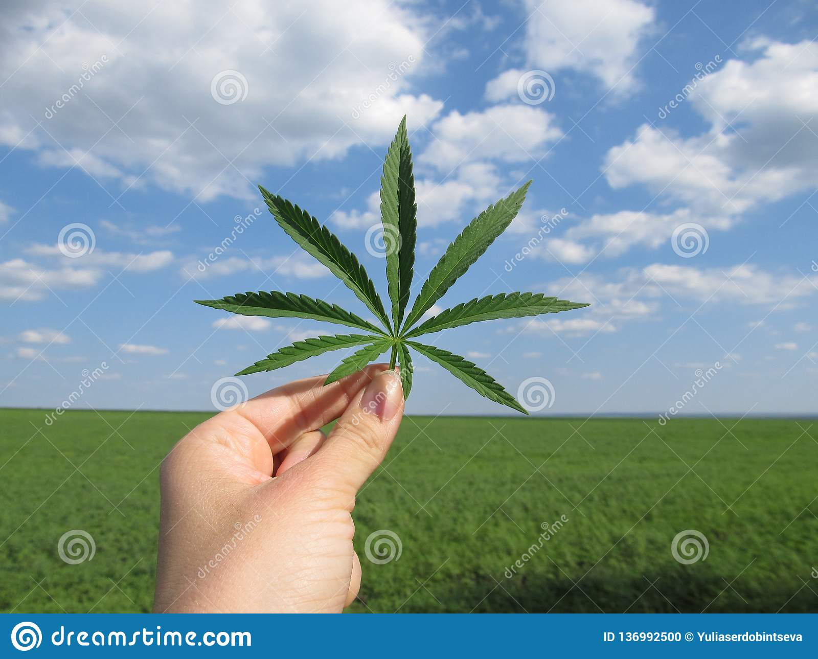 Blad van cannabis in de hand tegen een blauwe bewolkte hemel en een groen gebied
