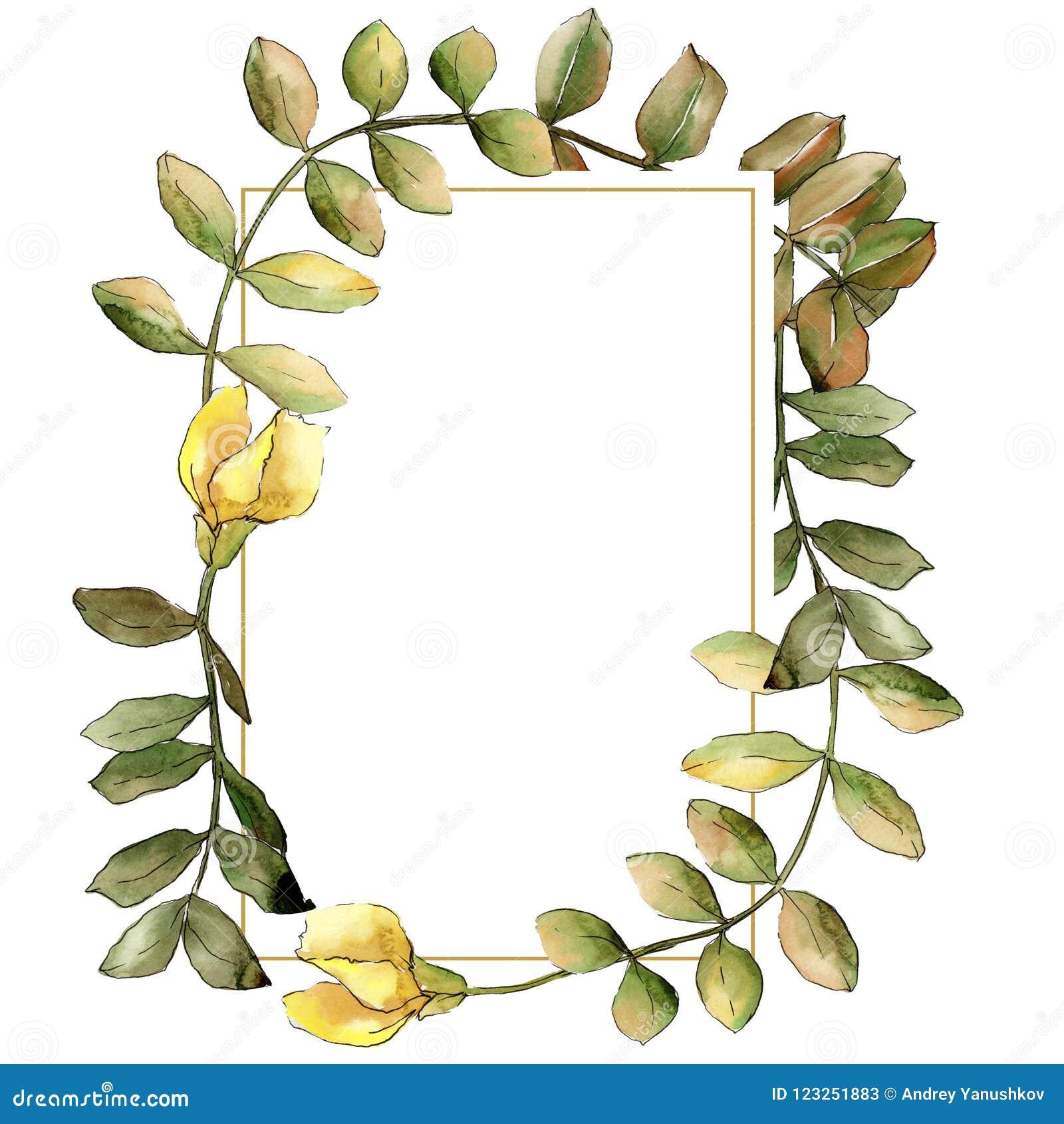 Blad van de waterverf het gele acacia Botanisch de tuin bloemengebladerte van de bladinstallatie Het ornamentvierkant van de kade