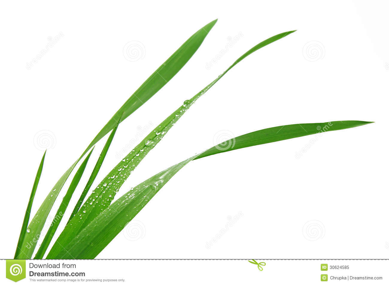 Blade Of Grass On White Background Royalty Free Stock