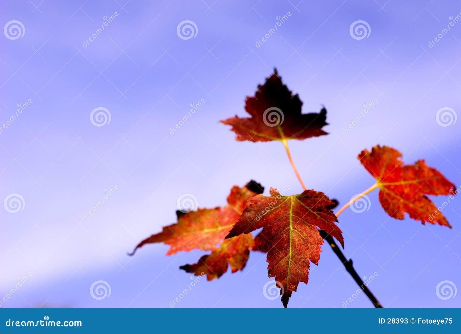 Bladeren en hemel