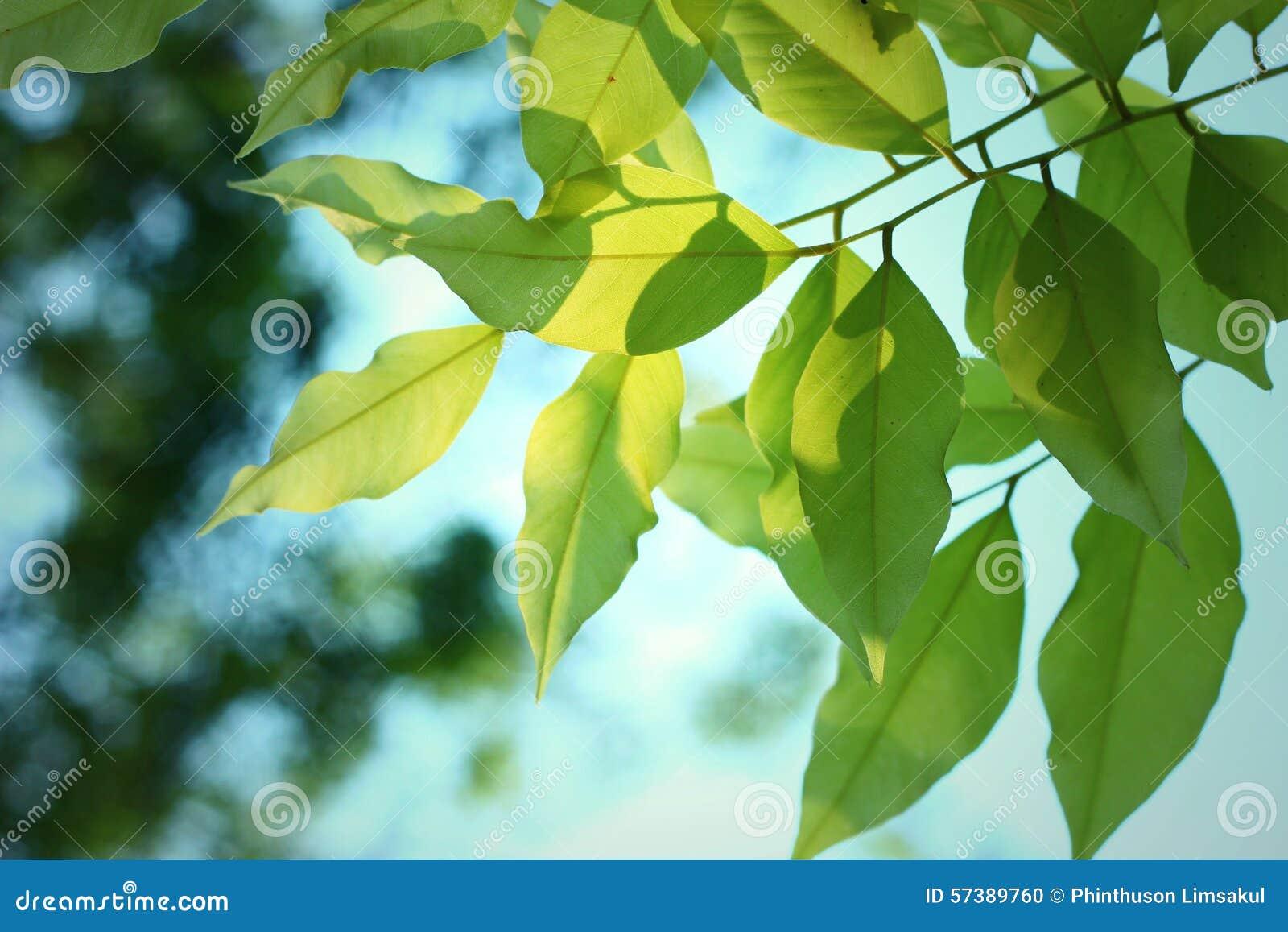 Bladeren en Schaduw