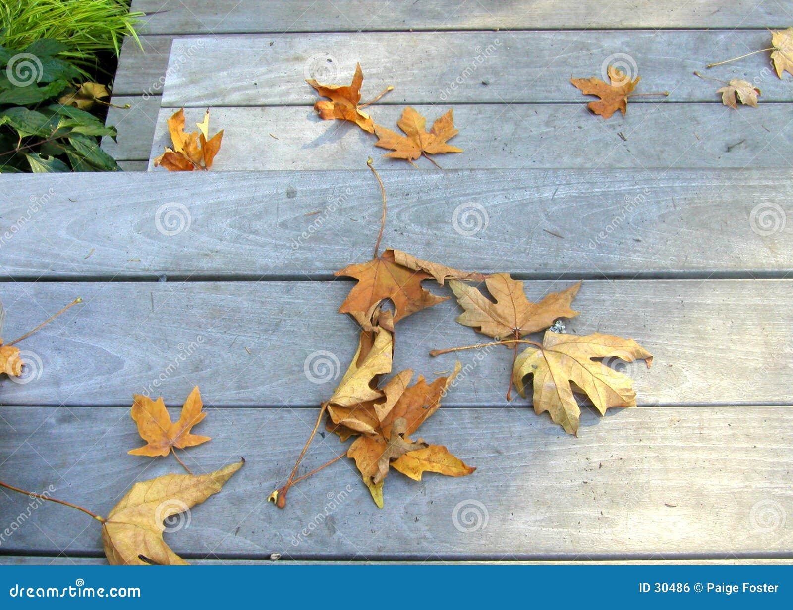 Bladeren op Stappen