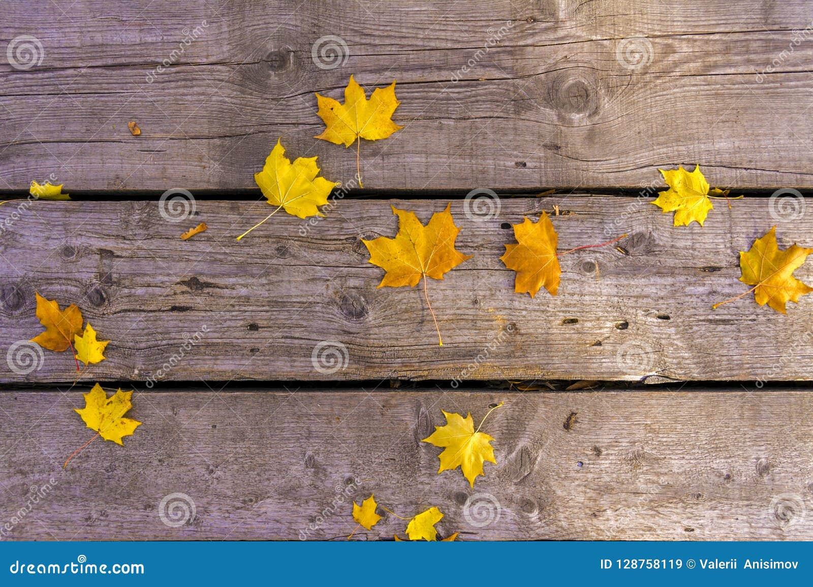 Bladeren van de de herfst liggen de gele esdoorn op de oude unpainted houten vloer De stemming van de herfst Vele roze en magenta