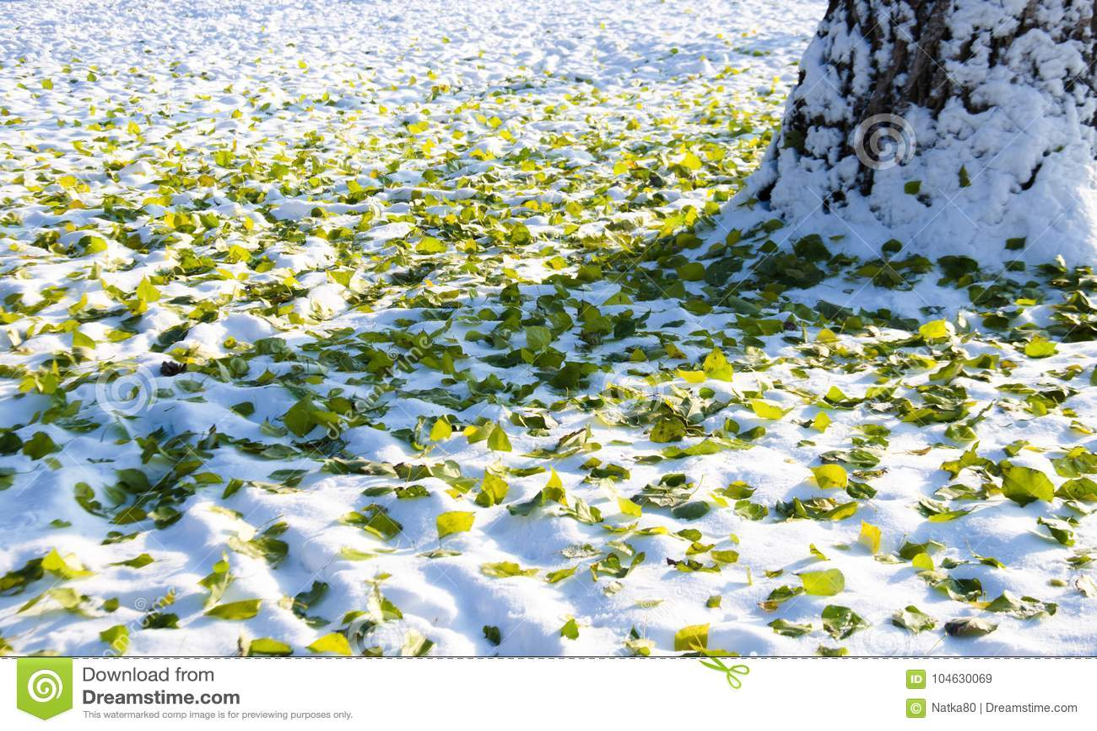 Download Bladeren Van Groen En Geel In De Sneeuw Stock Afbeelding - Afbeelding bestaande uit november, mooi: 104630069